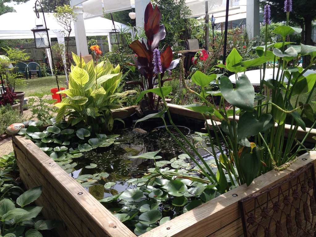 The plants love the pond as well