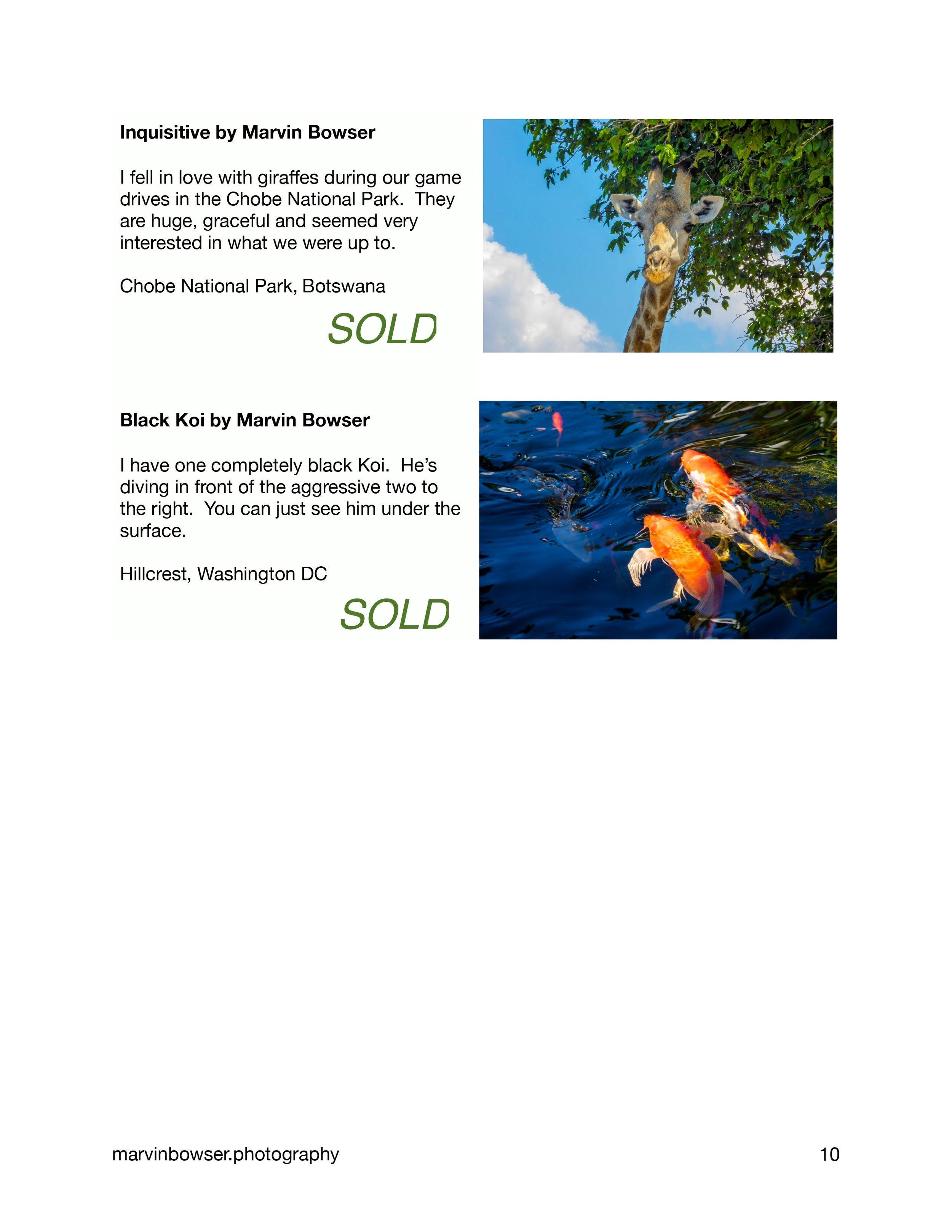 Color Light Movement Catalog-10.jpg
