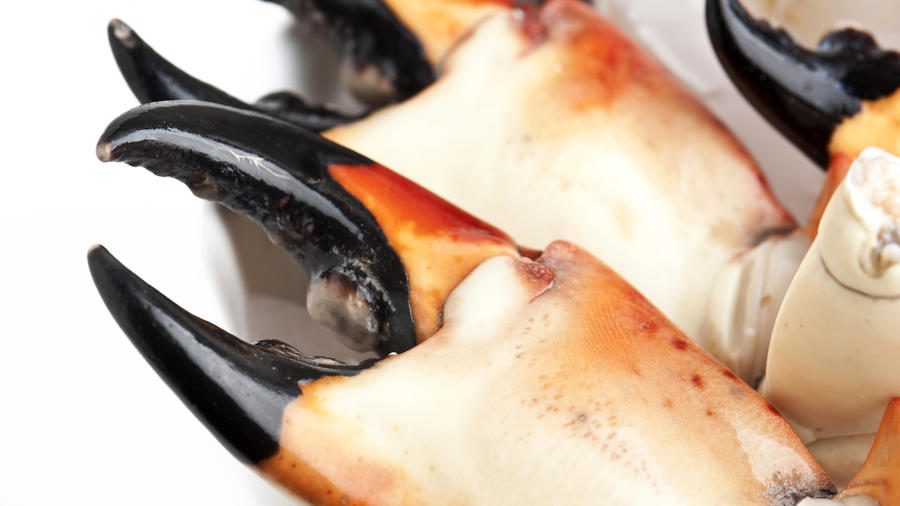 florida-stone-crab-155359933.jpg
