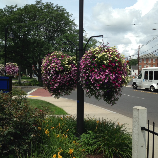 Floral Balls, Beautification Project