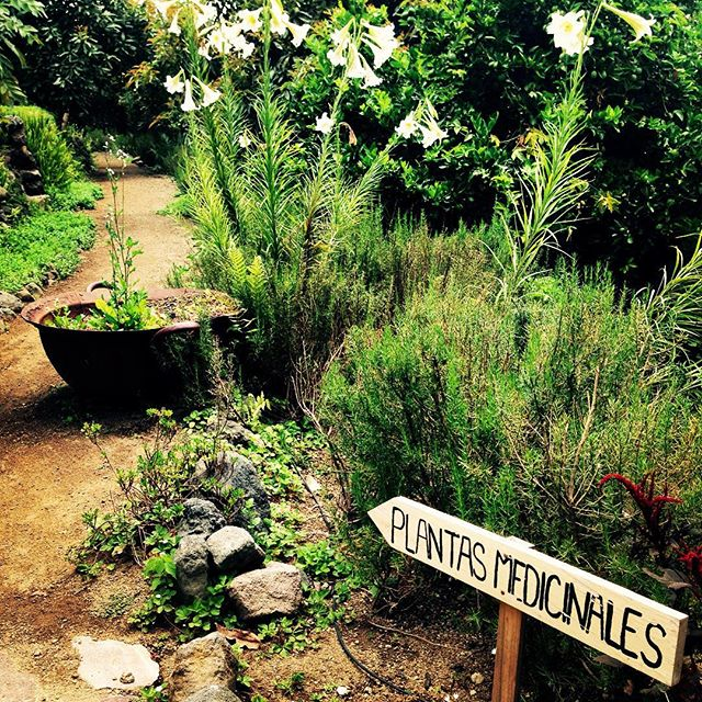 Medicinal plants at Cerro San Cristobal