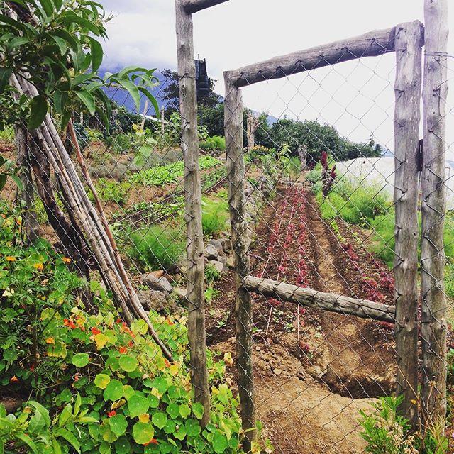 Organic farming above Antigua