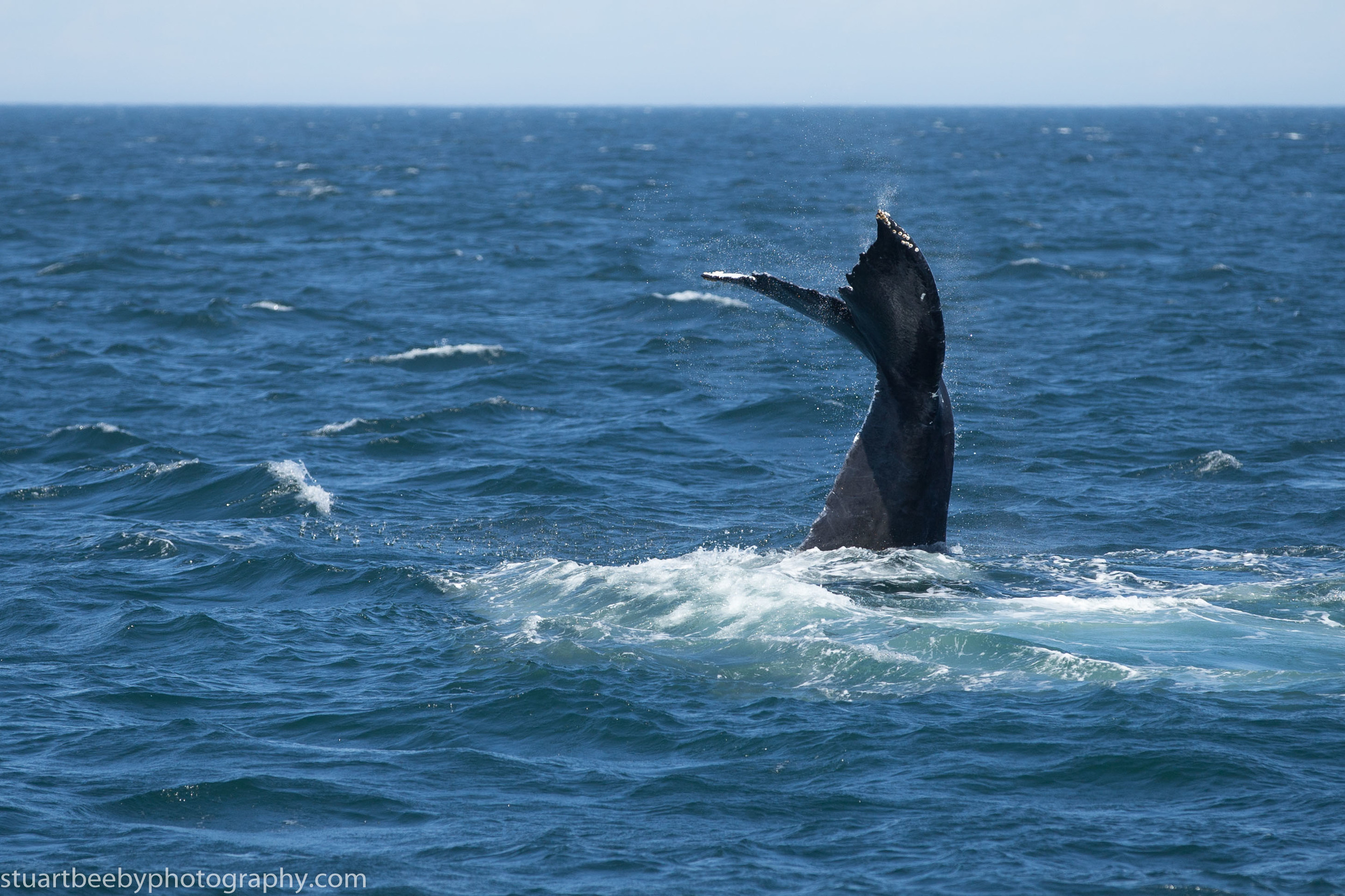 Whales put on a show
