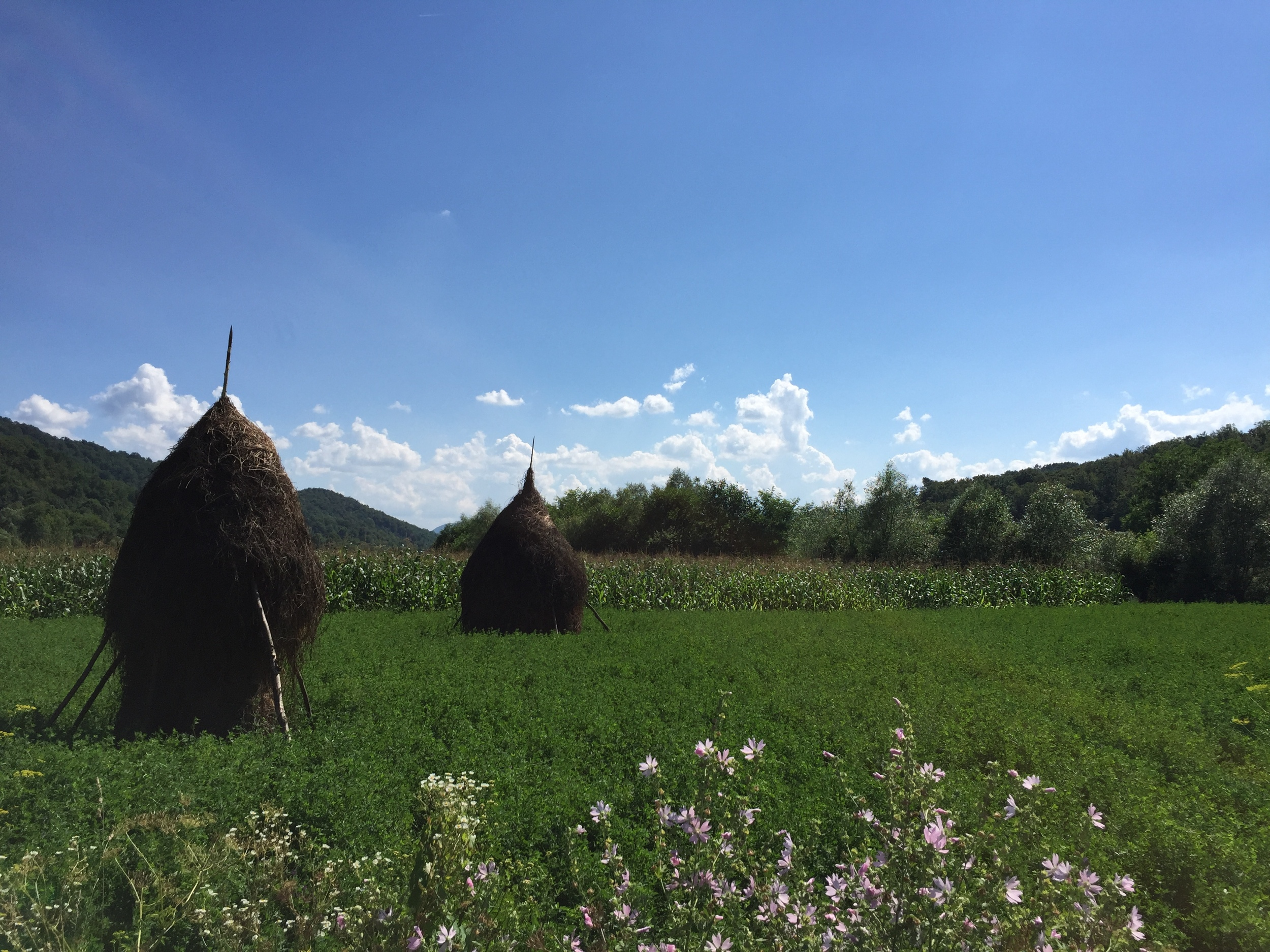 These hay stacks are very Romanian.