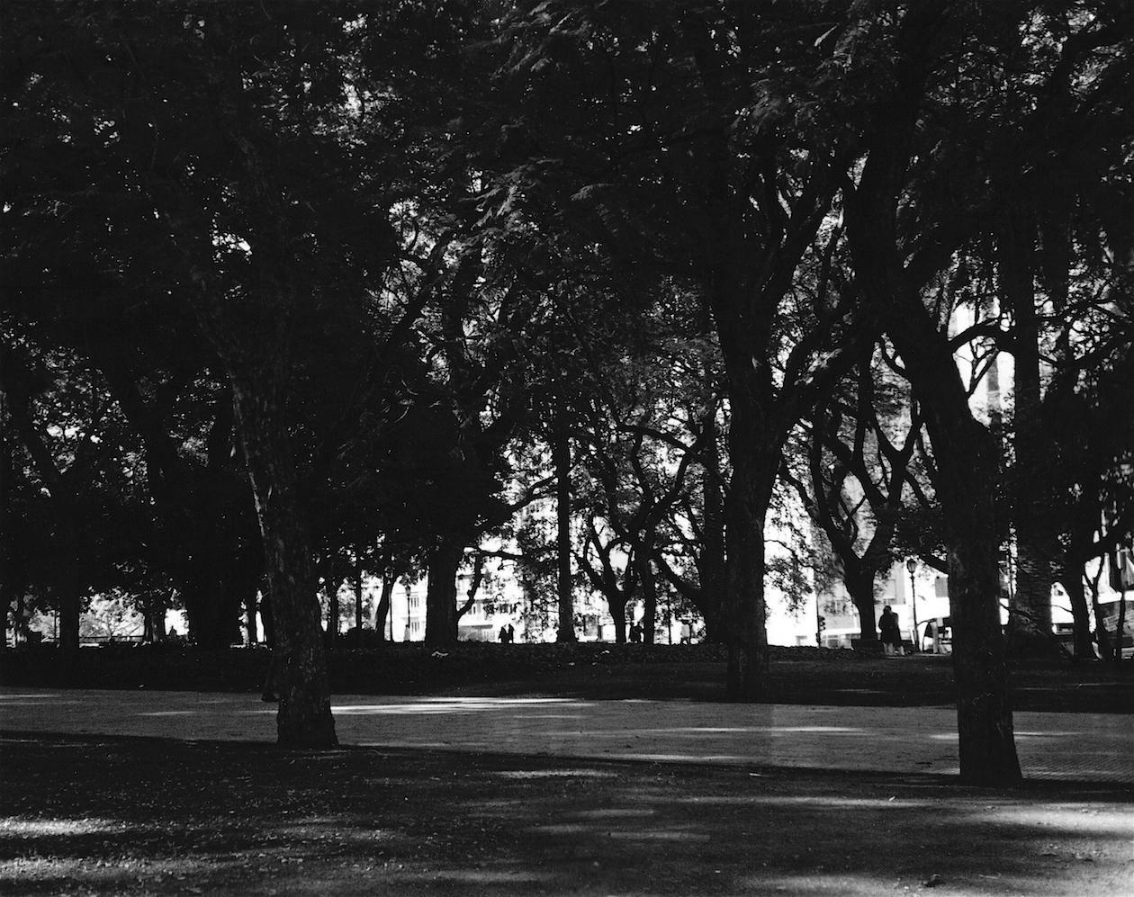 Backlit Park.jpg