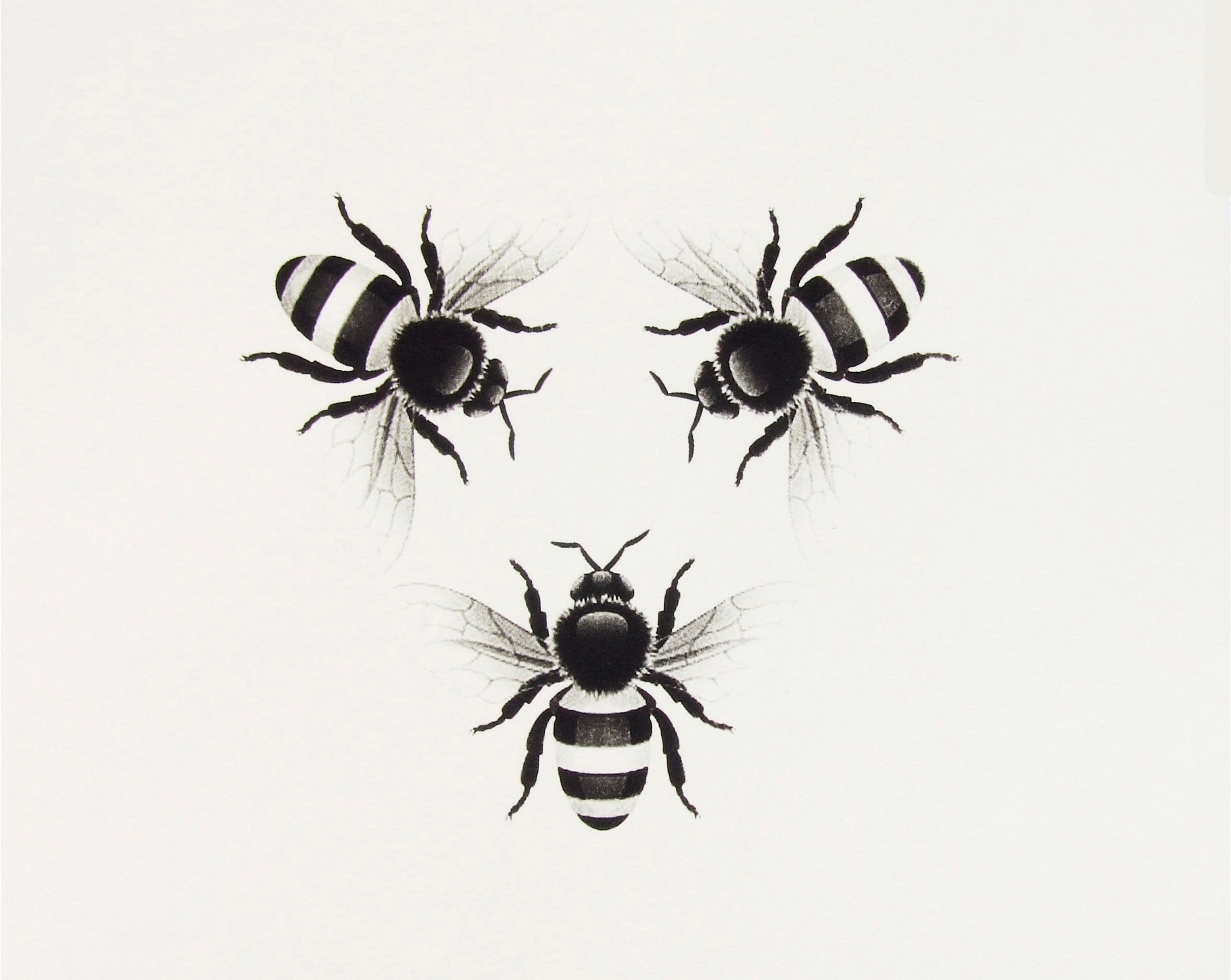 Scott Trevelyan  Bees Stare at Him  2014 photopolymer etching on Hahnemuhle paper, beeswax and timber frame 40 x 30cm