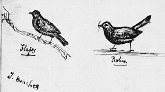 The four nestlings from  Fabulous Histories : Dicky, Pecksy, Flapsy, and Robin.