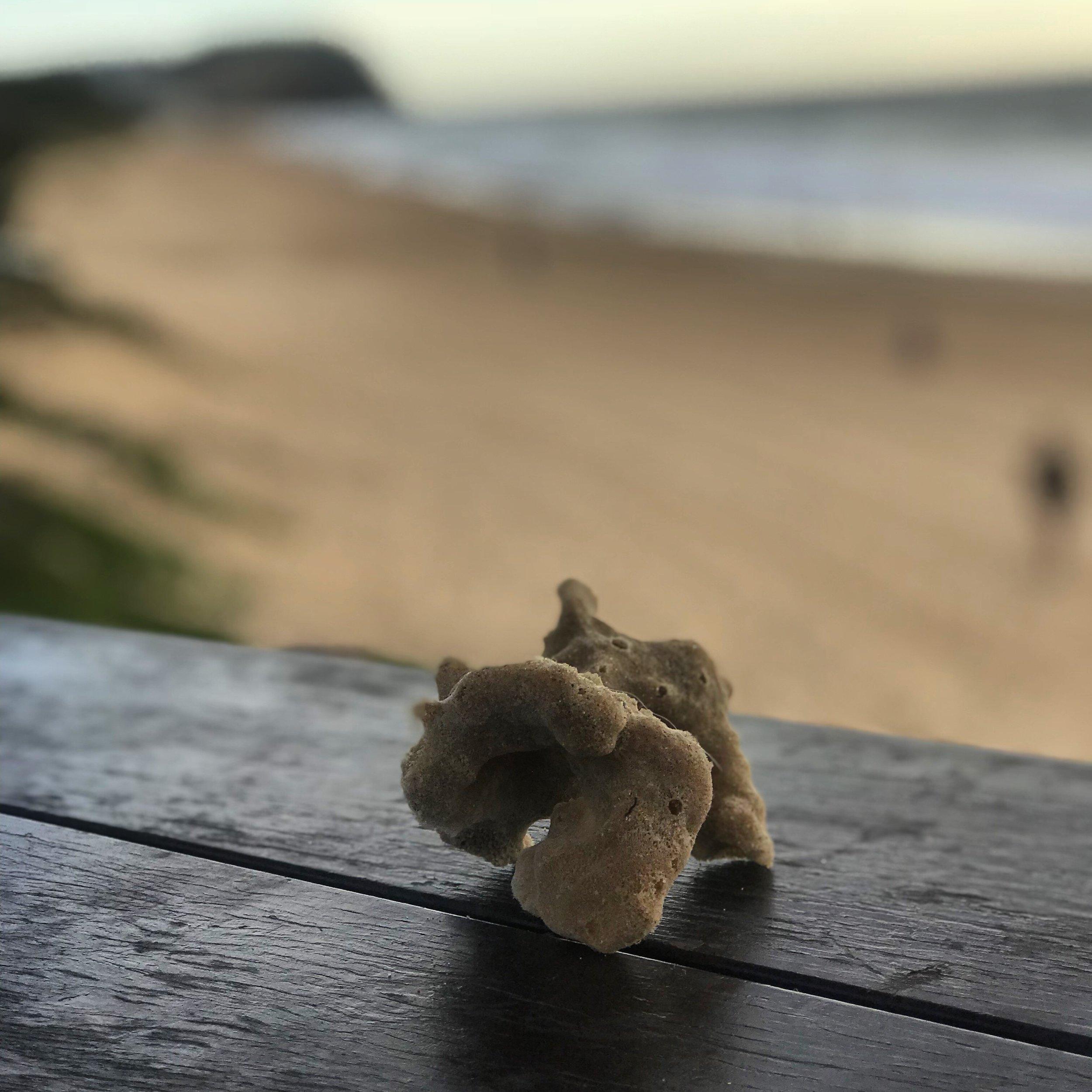 Sponge Merewether Beach