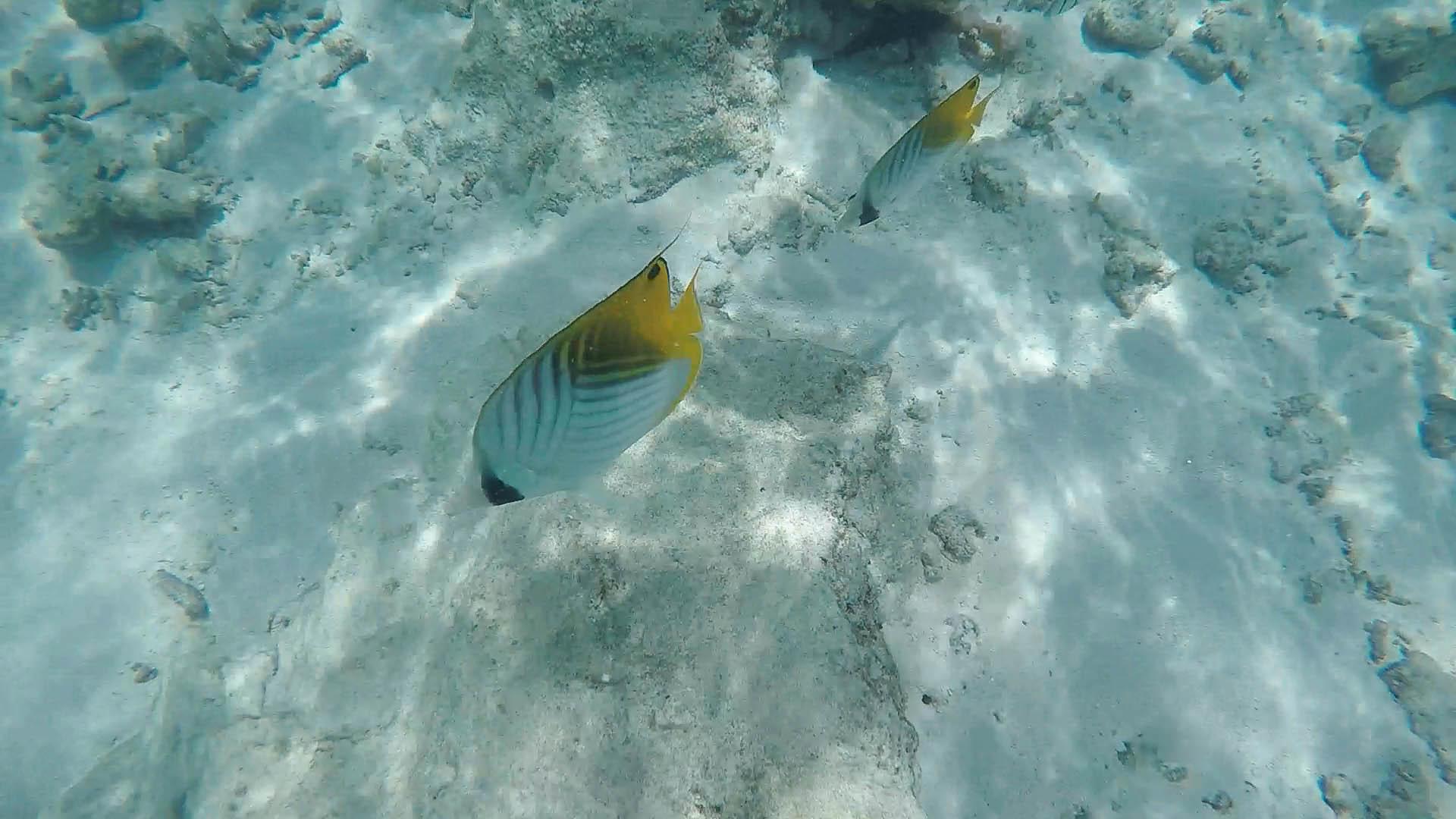 the maldives-52.jpg