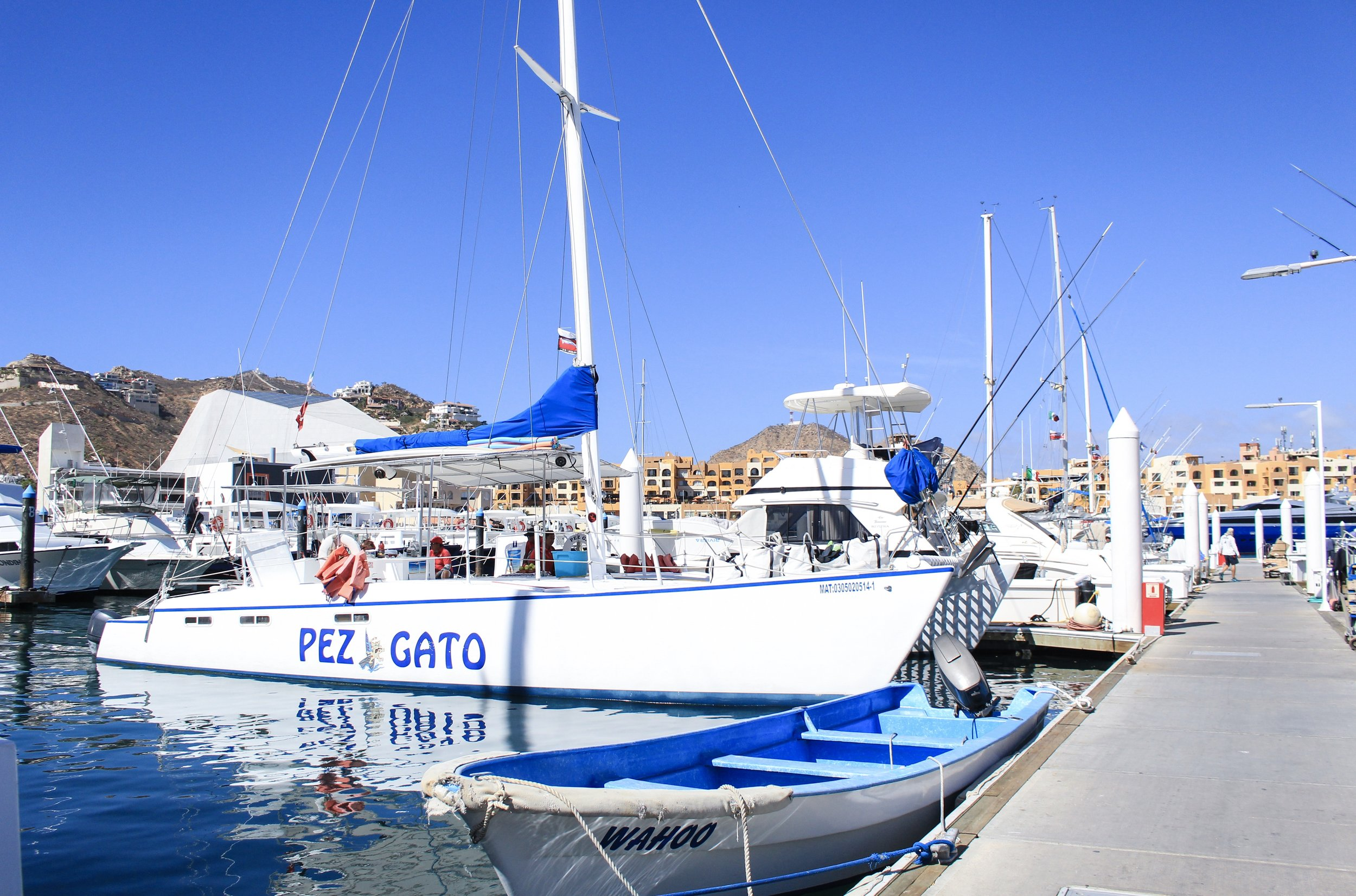 BEAUTIFUL CATAMARAN COURTESY OF pezgato cabO TOURS - los cabos, MEXICO