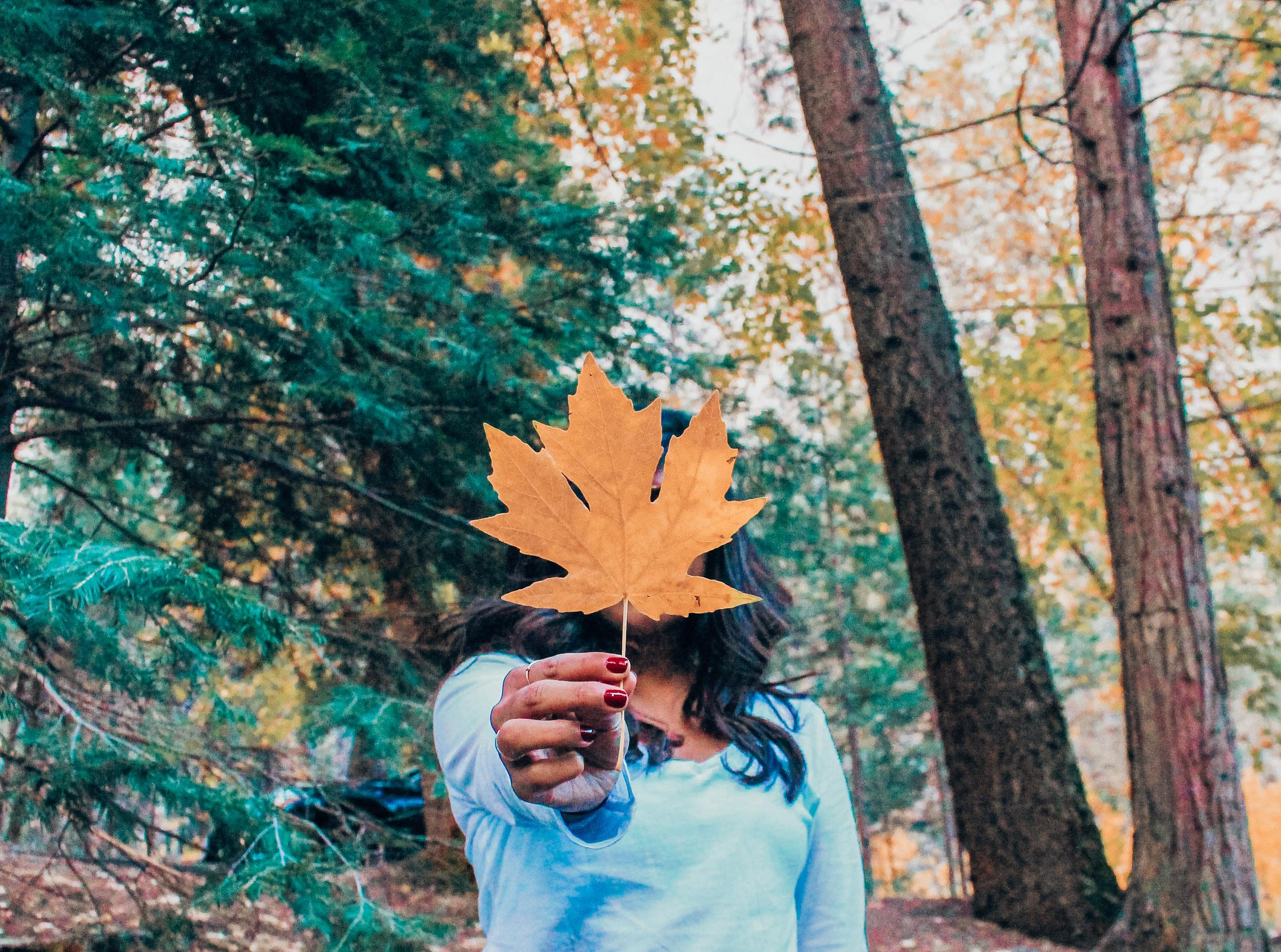 fall leaf in yosemite in autumn