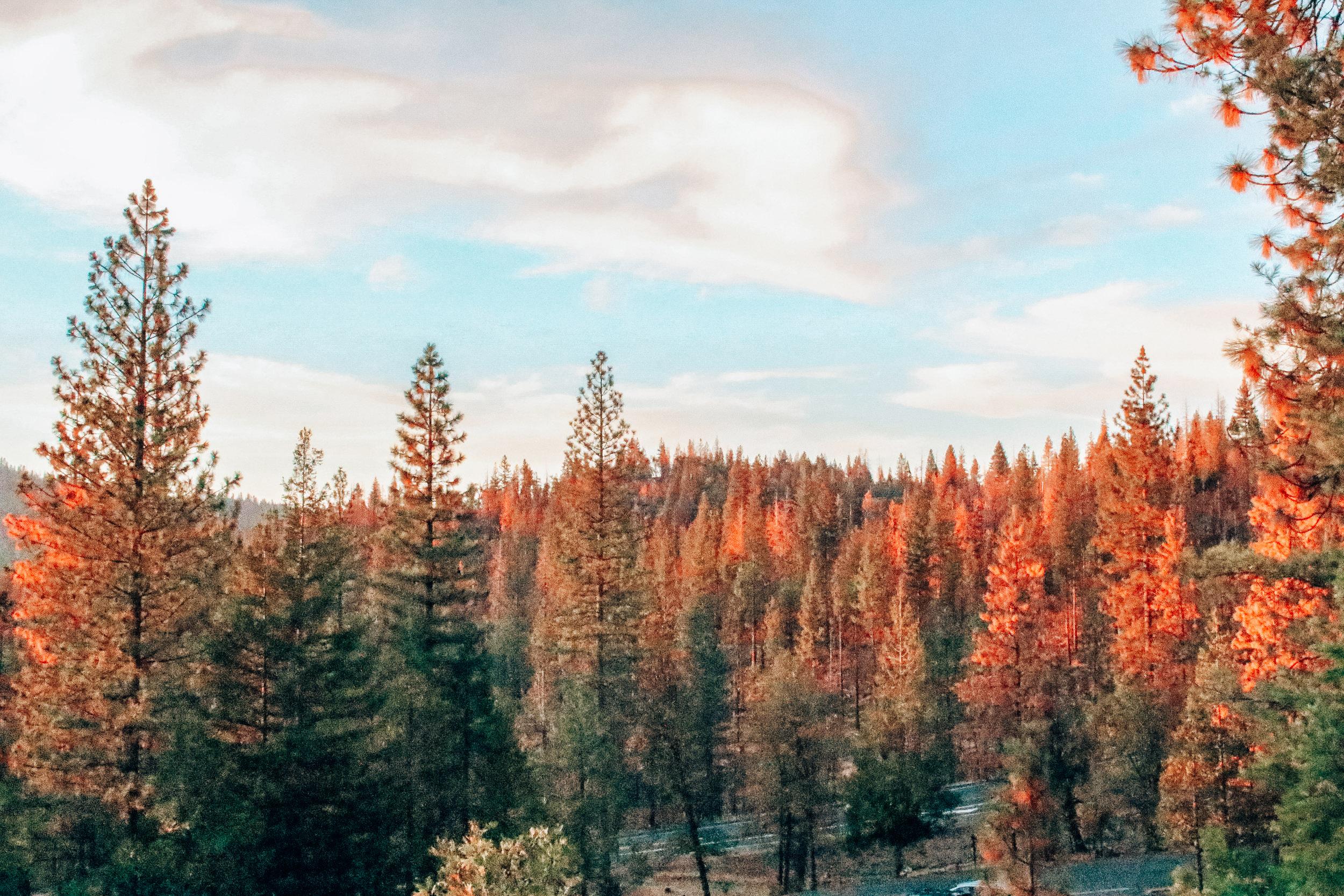 Yosemite National Park from Rush Creek Lodge