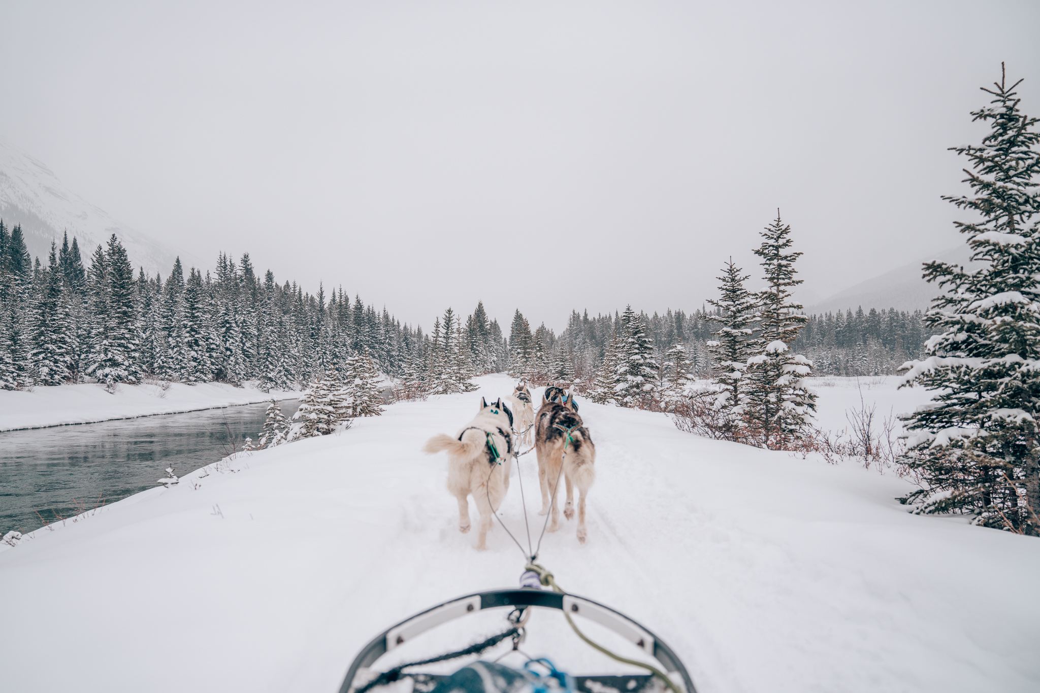 How To Book a Dog Sledding Tour in Banff, Canada