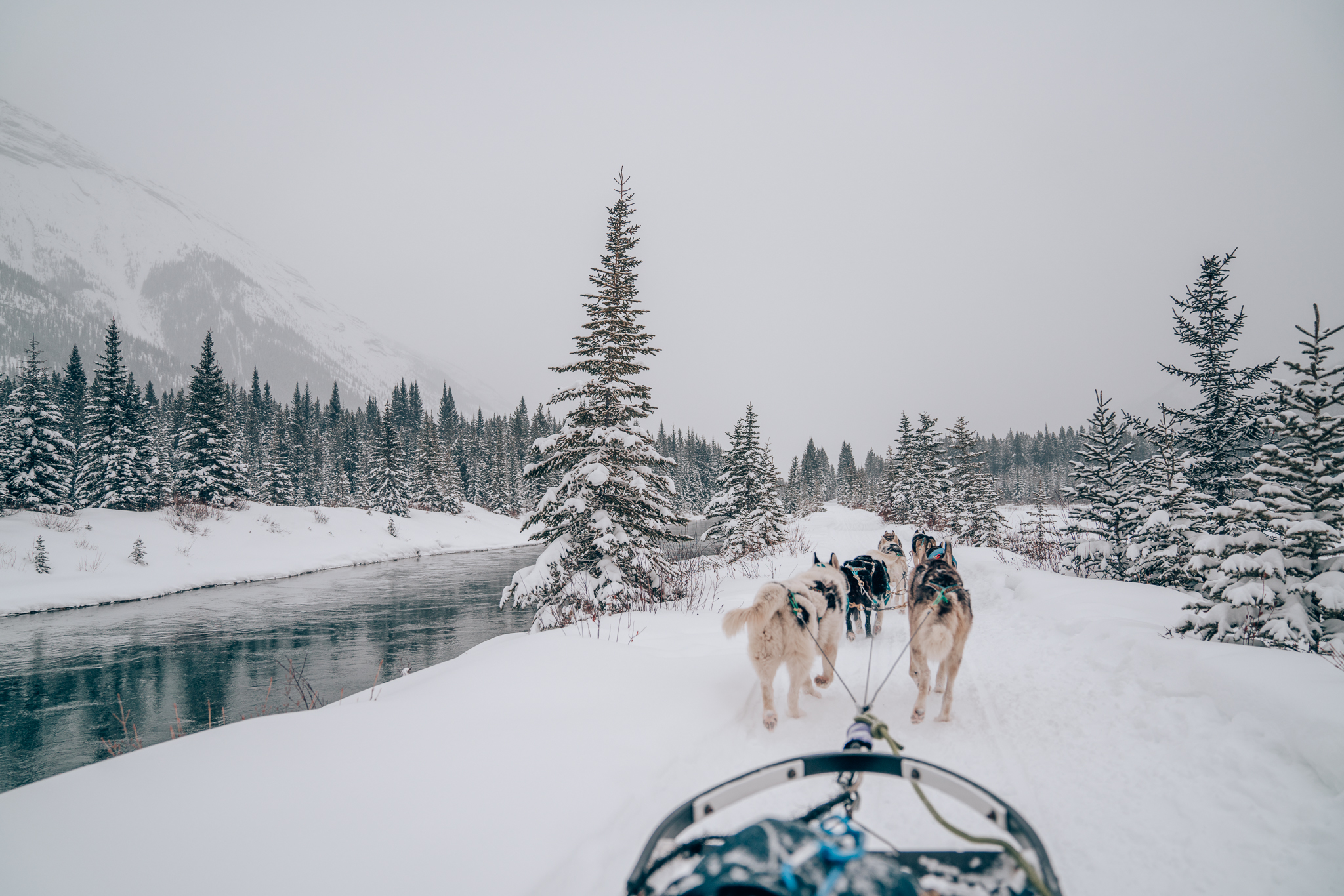 Dog Sledding Tour in Canmore, Banff, Canada with Snowy Owl Sled Dog Tours