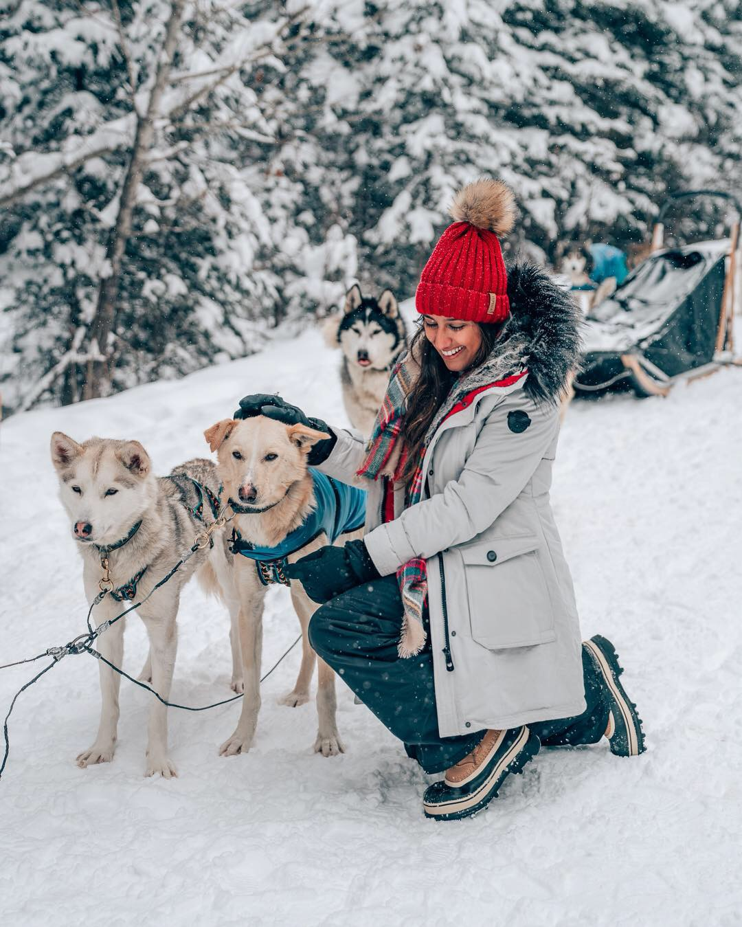 Dog Sledding, Snowy Owl Dog Sledding Tour, Banff, Alberta