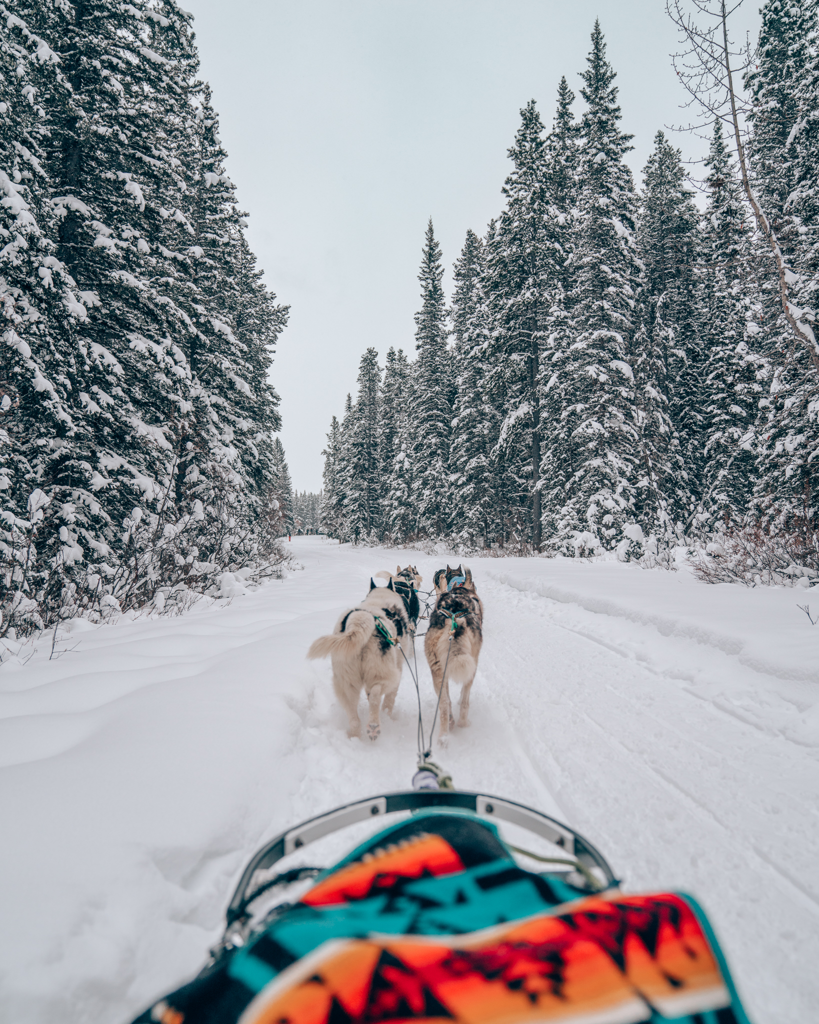 Dog Sledding in Banff National Park