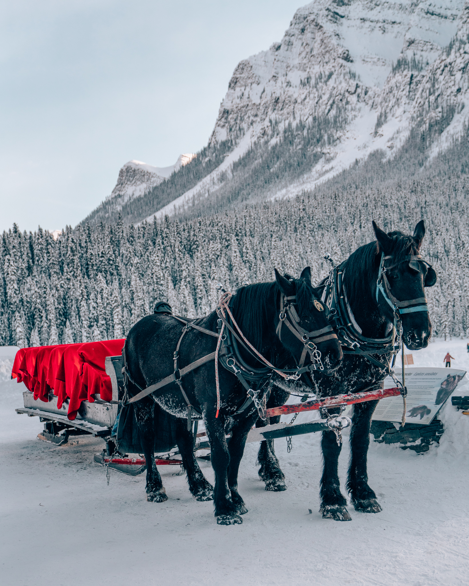 Sleigh Ride at the Fairmont Chateau Lake Louise