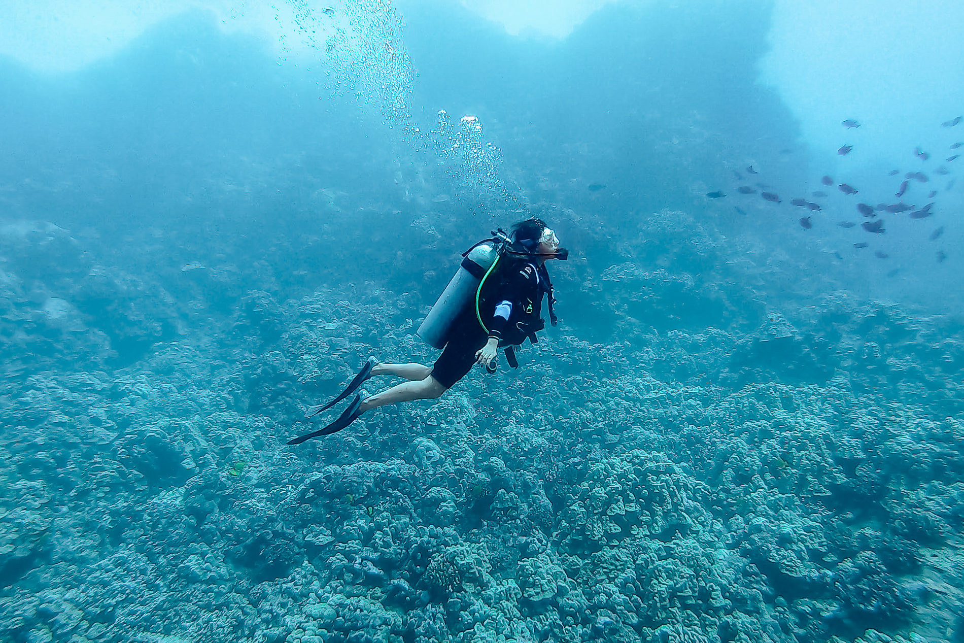 Scuba Diving the Lanai Cathedrals —  click here  to see me swimming with the cutest sea turtle!