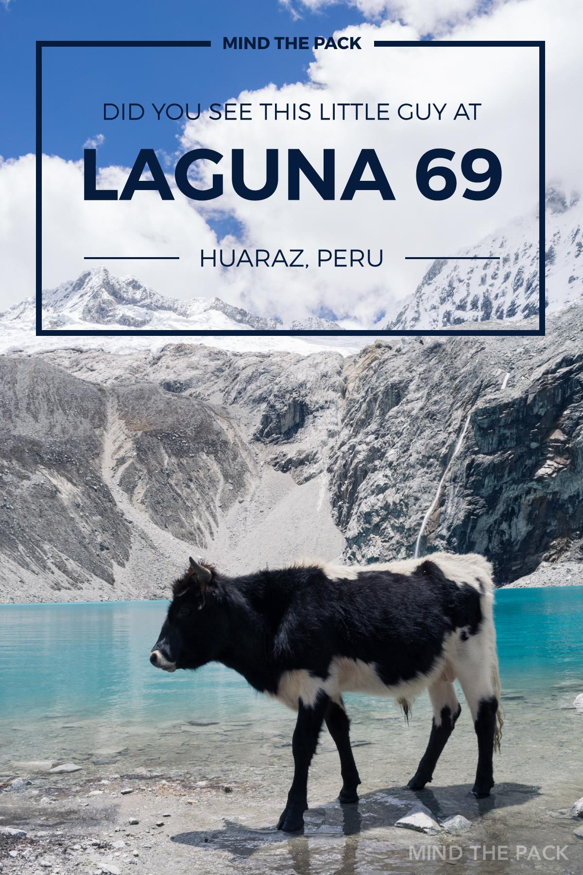 Laguna 69 –Mind the Pack