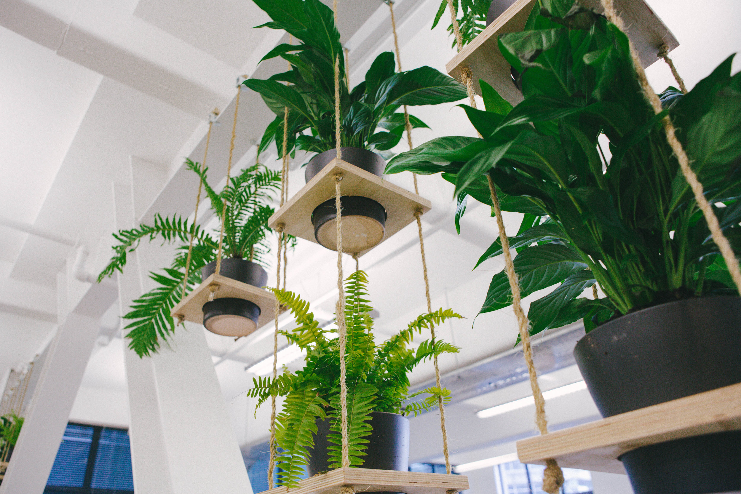 PlantWall (1 of 1).jpg