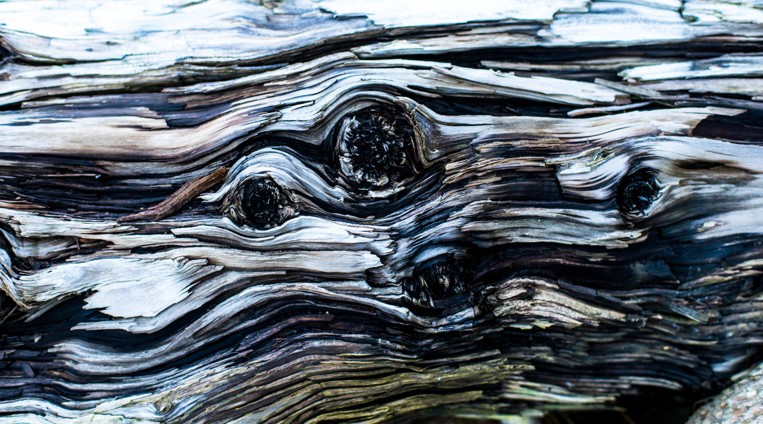 Details of the driftwood