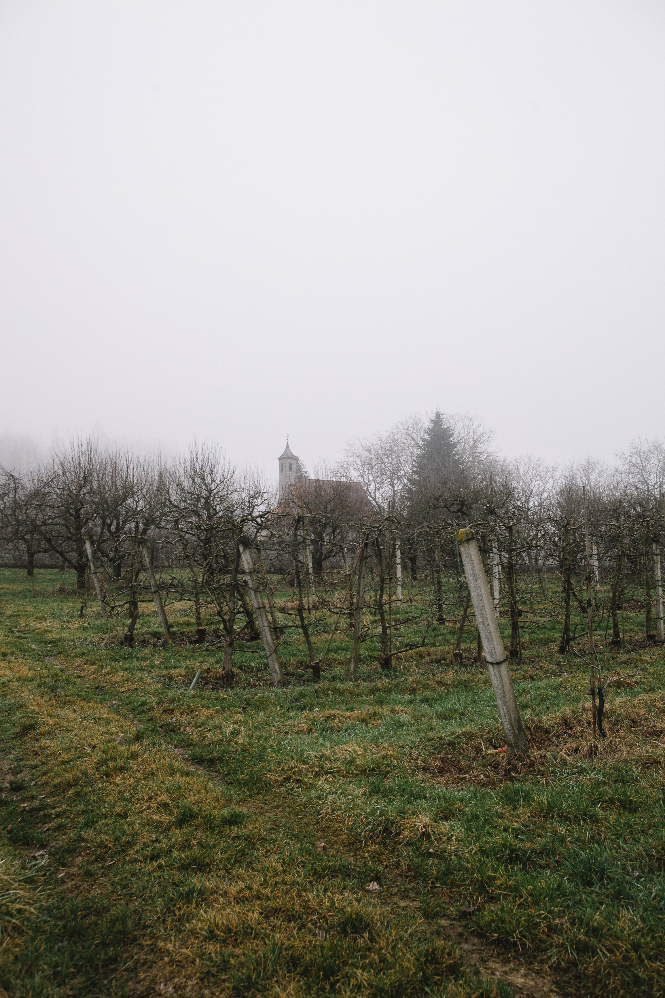 Weinreben neben dem Haus Pax/ Wineyard next to House Pax