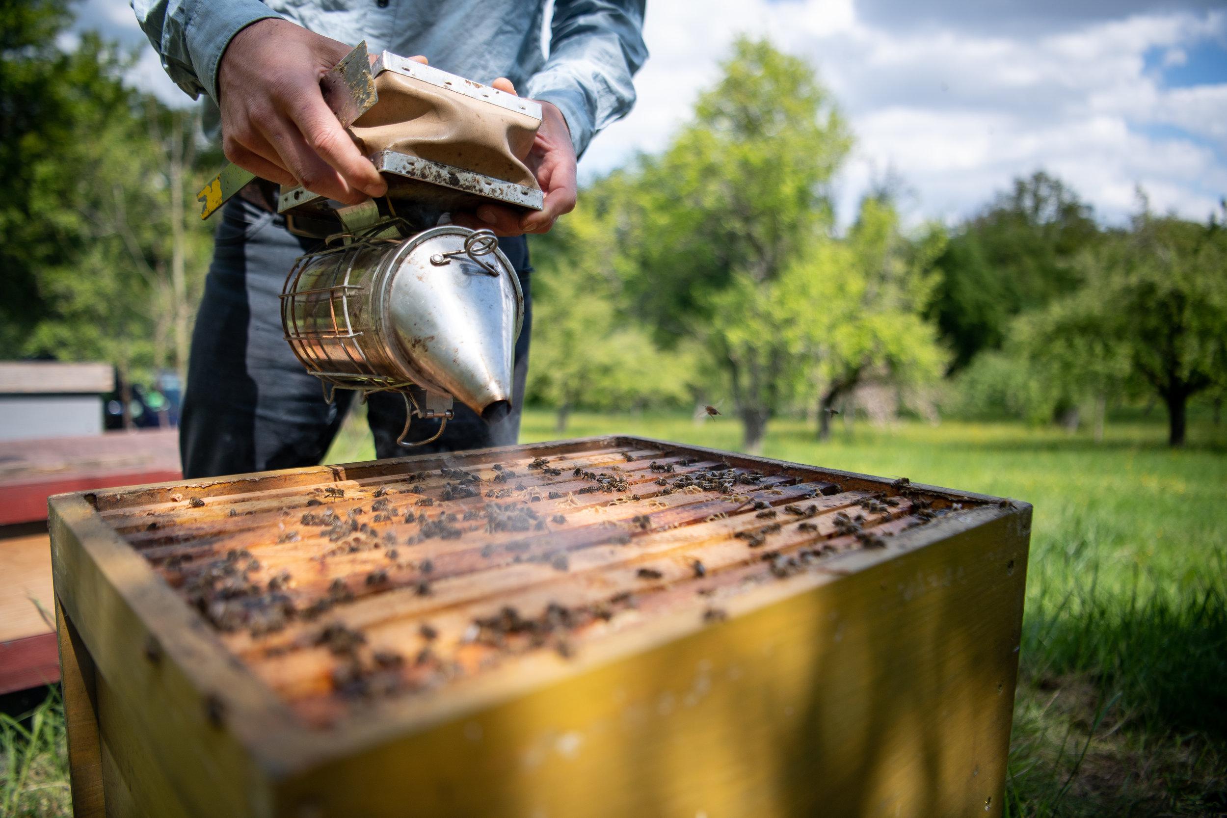 Gerstmaier bringt mit der Organisation ProBiene ein Volksbegehren nach Baden-Württemberg, dass die Bienenbevölkerungen im Land schützen und retten soll.