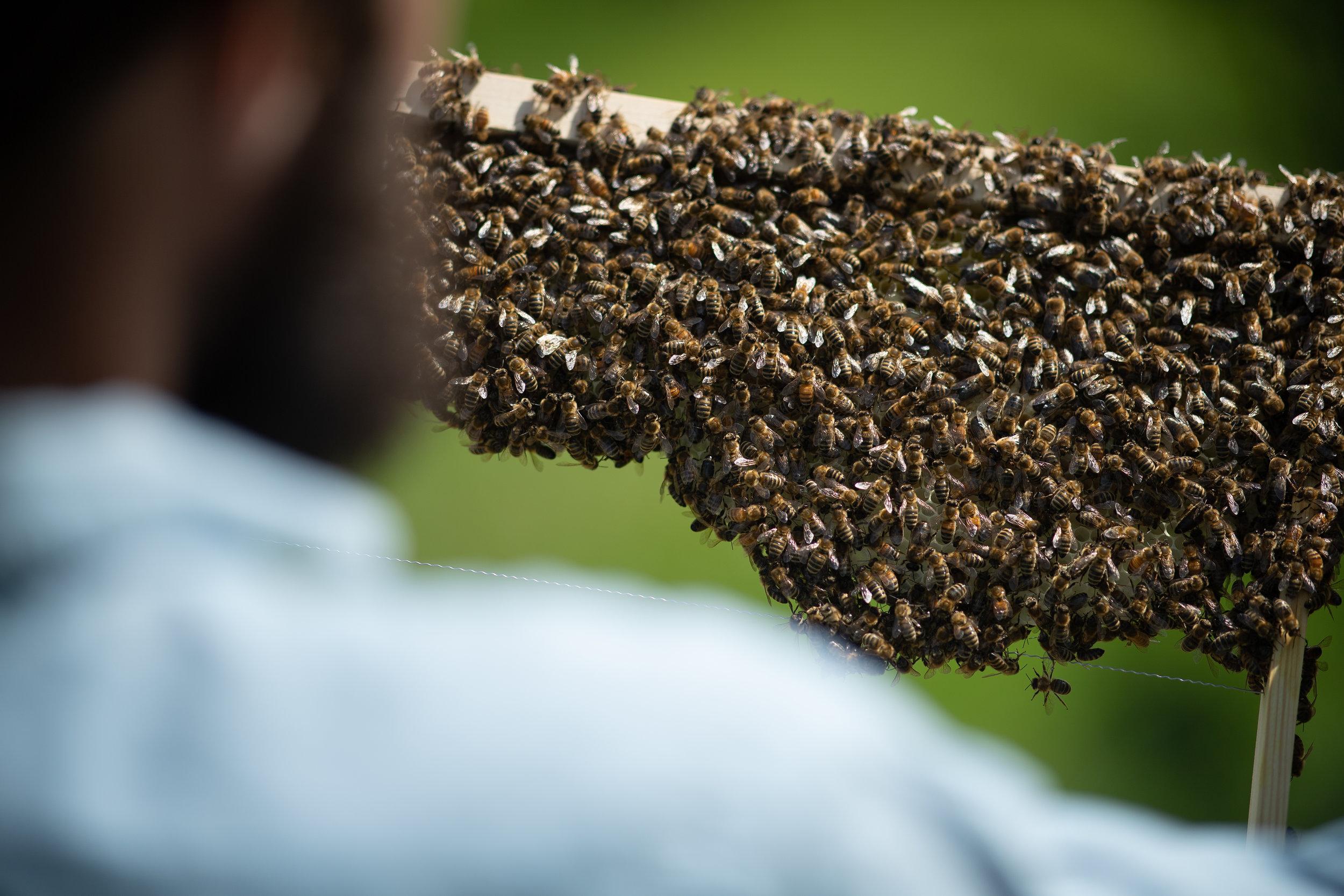 Hier betrachtet er eines seiner vielen Bienenvölker.