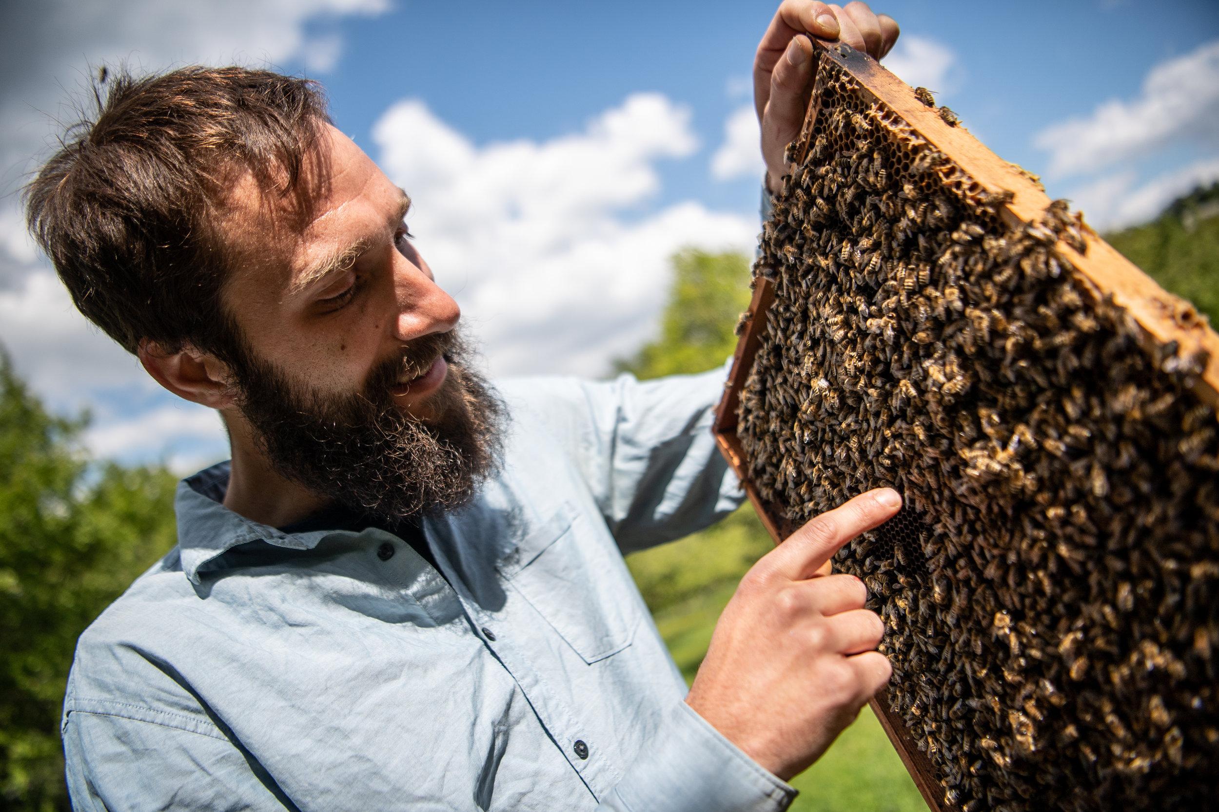 Er ist als Imker vom Bienensterben direkt betroffen.