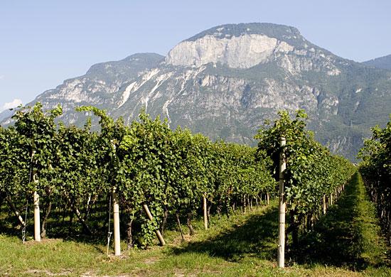 Castelfeder Vineyards shot.jpg