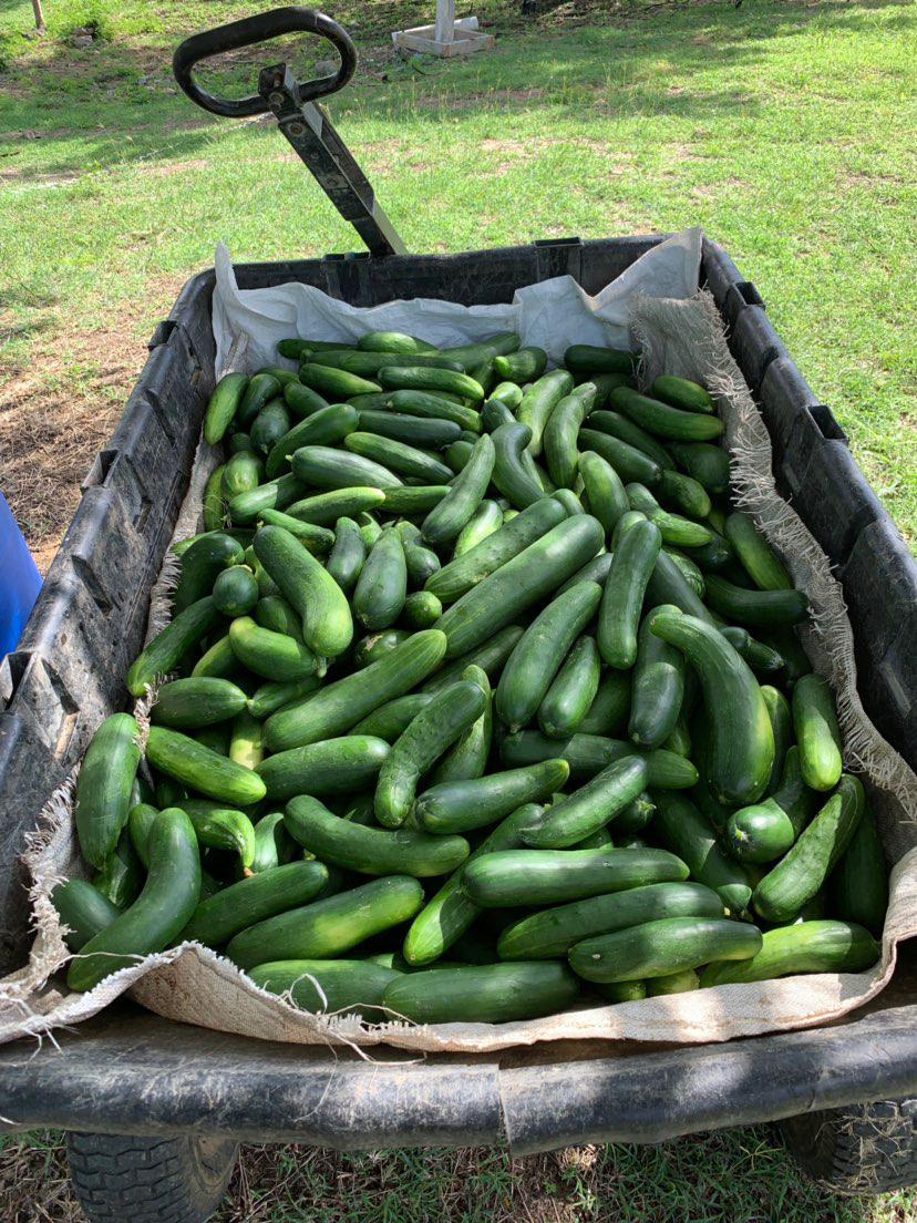 Food for Life! - Organic Farming @ Levera Nature & Beach Resort