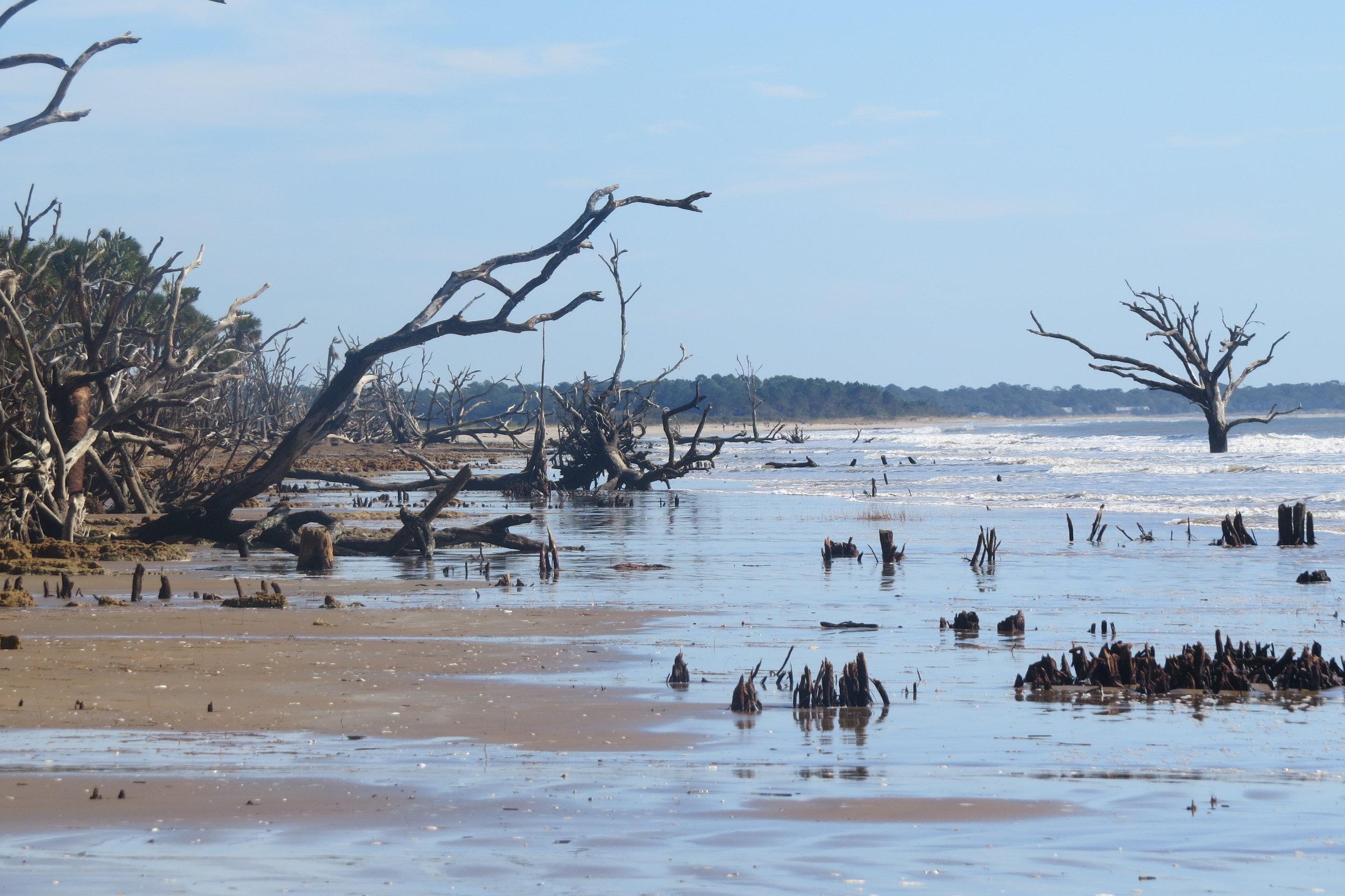 The beach at Botany Bay Plantation after Hurricane Matthew (Photo: Bess Kellett)