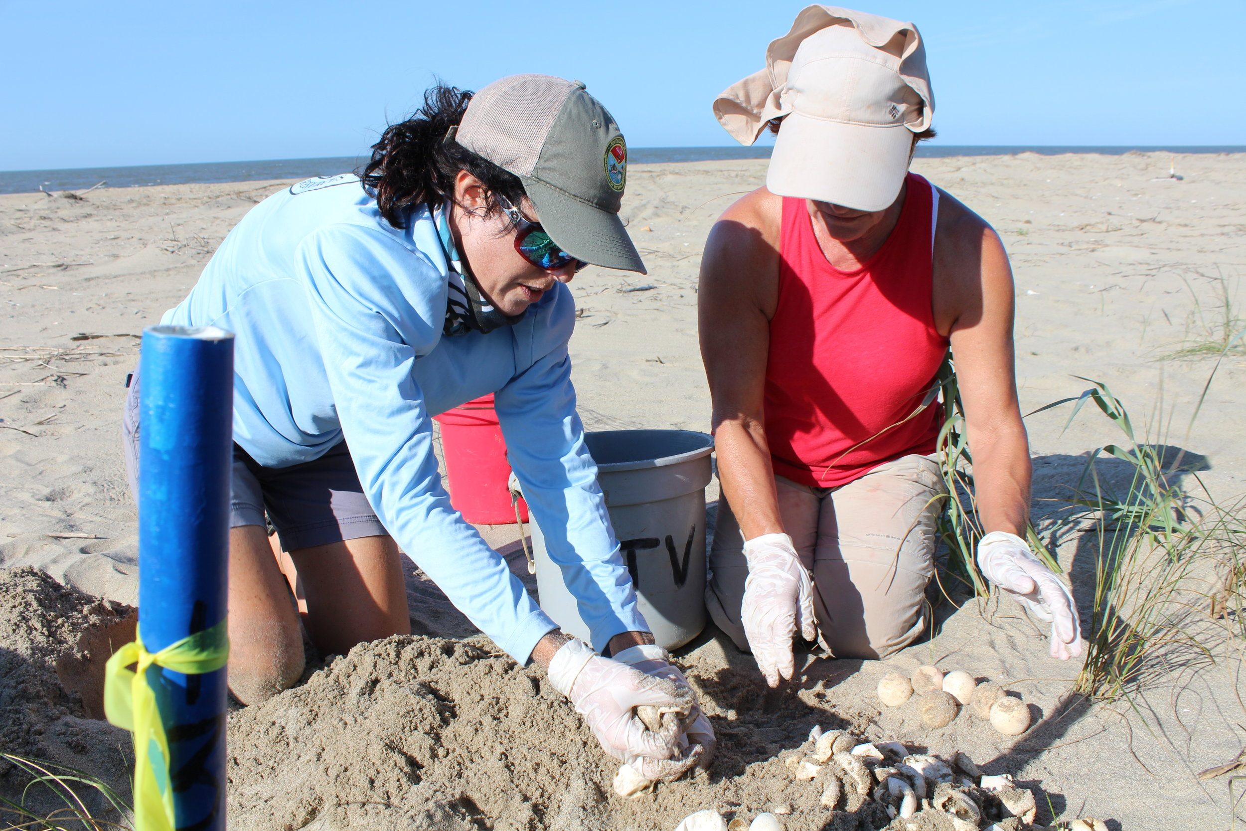 SCDNR sea turtle program coordinator Michelle Pate and Cape Romain National Wildlife Refuge volunteer Reyne Miller sort through the contents of a loggerhead nest on Cape Island. (Photo: E. Weeks/SCDNR)