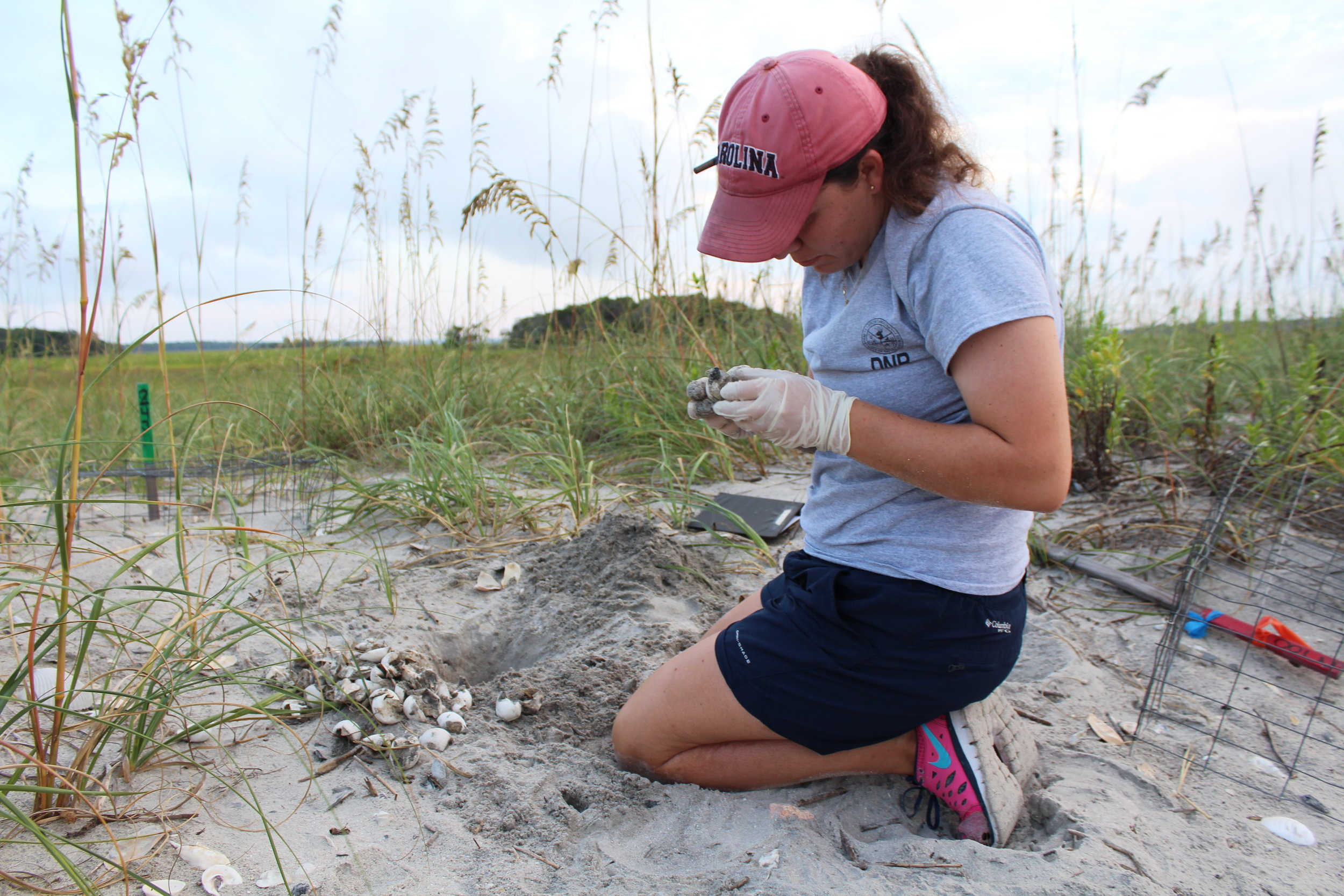 SCDNR sea turtle intern Ann Clark conducts an inventory of a hatched loggerhead nest on Botany Bay Plantation's beach in 2016. (Photo: E. Weeks/SCDNR)