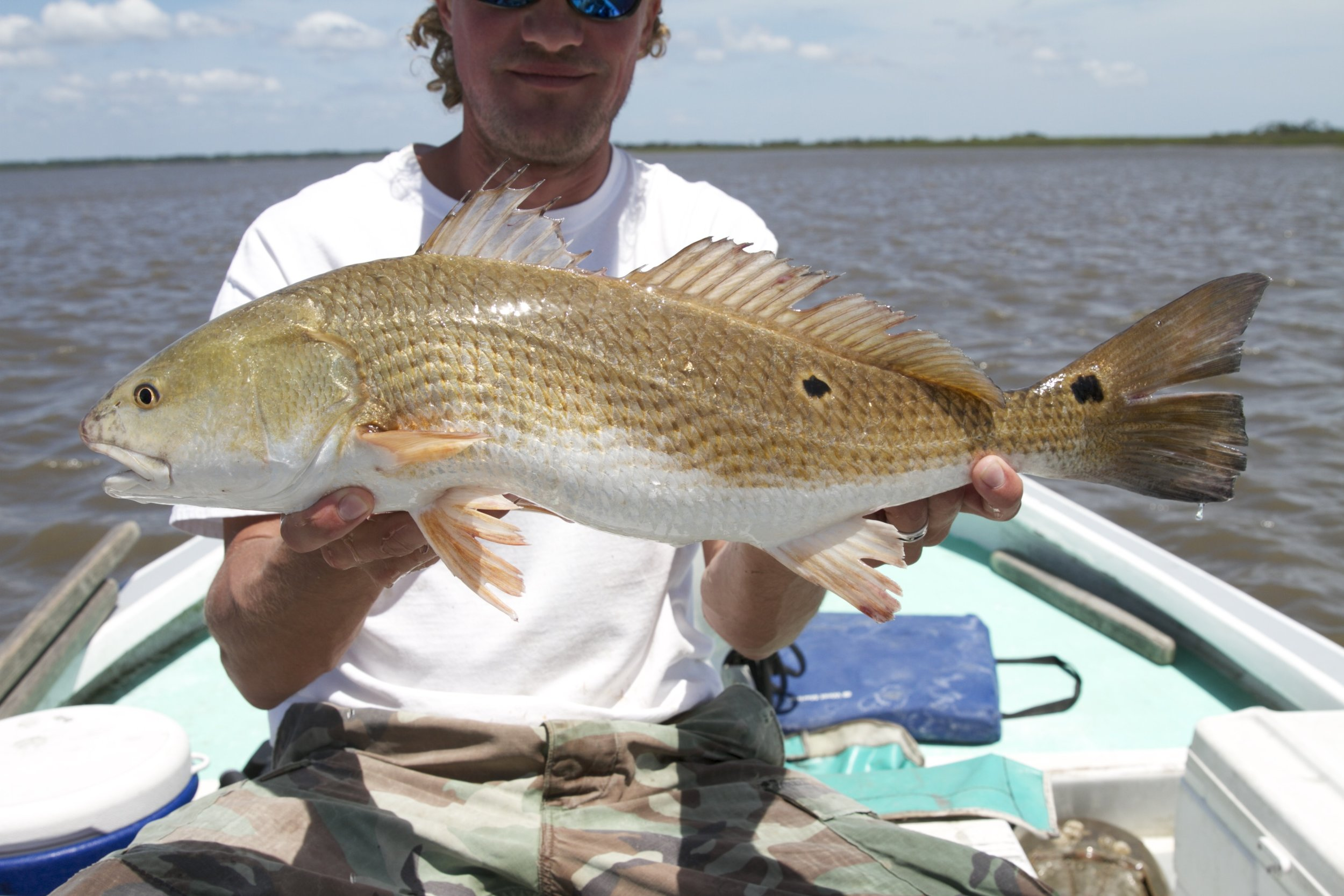 SCDNR biologists caught, measured, and later tagged this red drum in a routine trammel net survey in the ACE Basin. (Photo: Ken Winikur/Ken Winikur Productions)