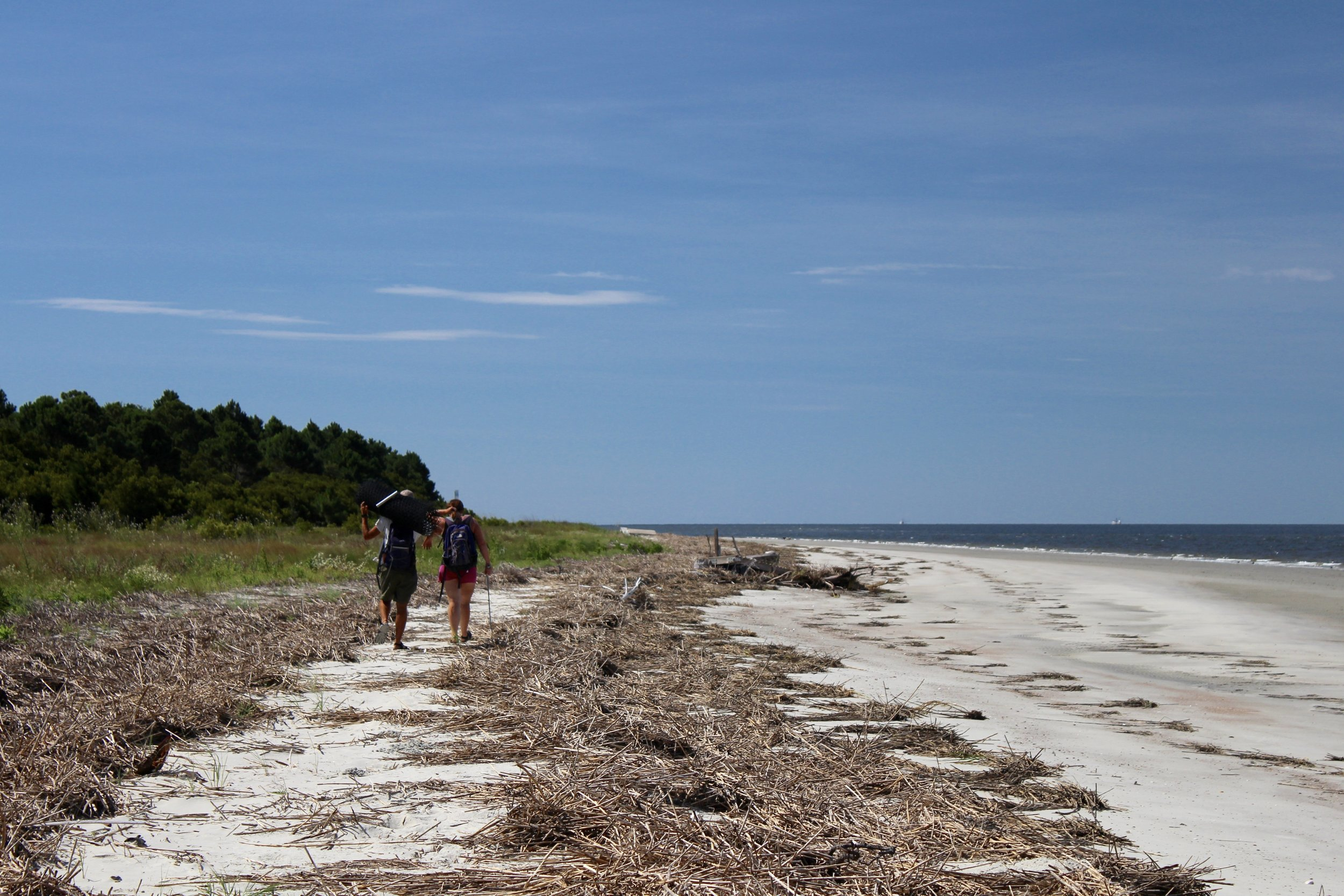 SCDNR biologists walk Otter Island's three-mile beach weekly in the summer to count and protect sea turtle nests. (Photo: E. Weeks/SCDNR)