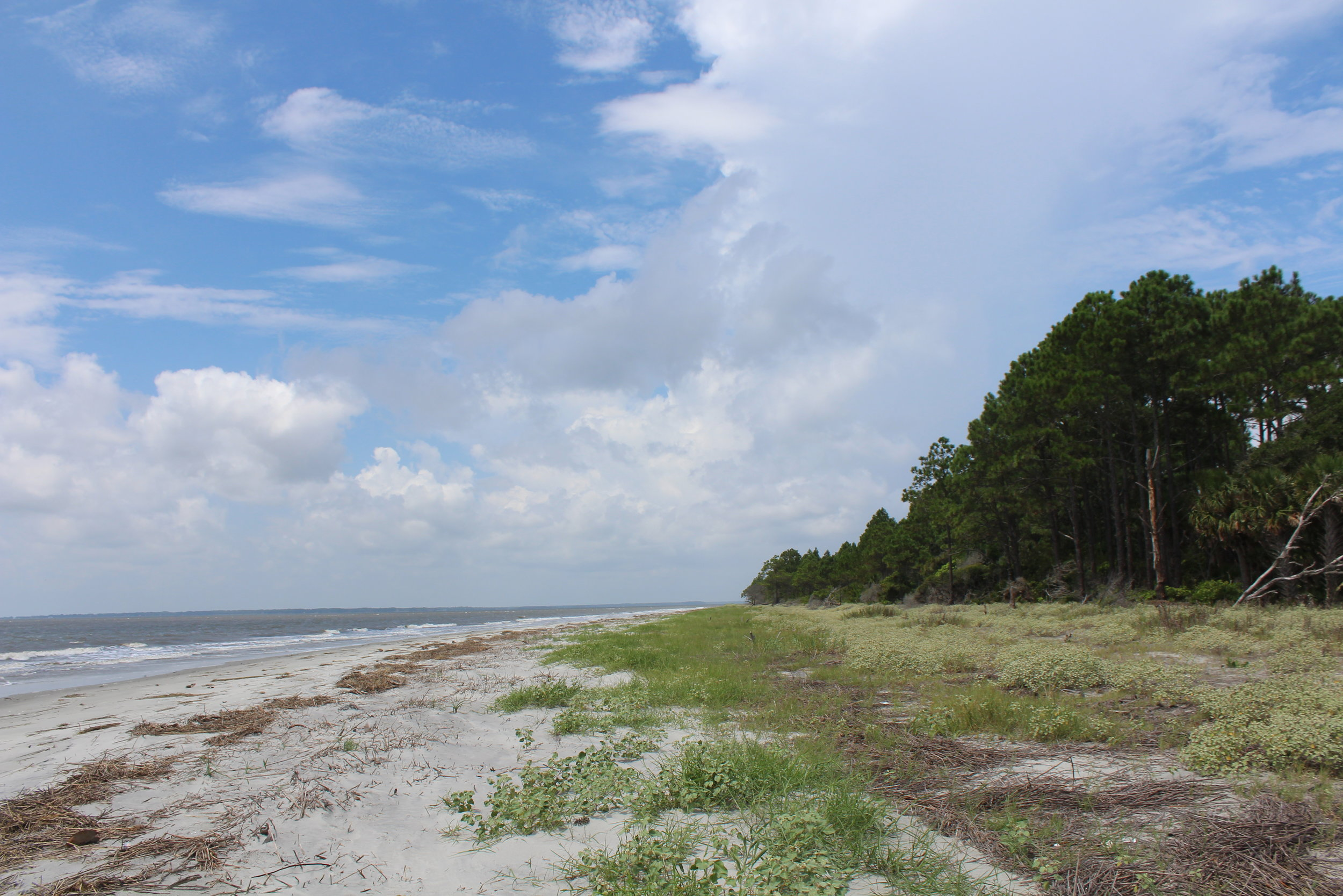 Looking northwest along Otter's beach into the Ashepoo River (Photo: E. Weeks/SCDNR)