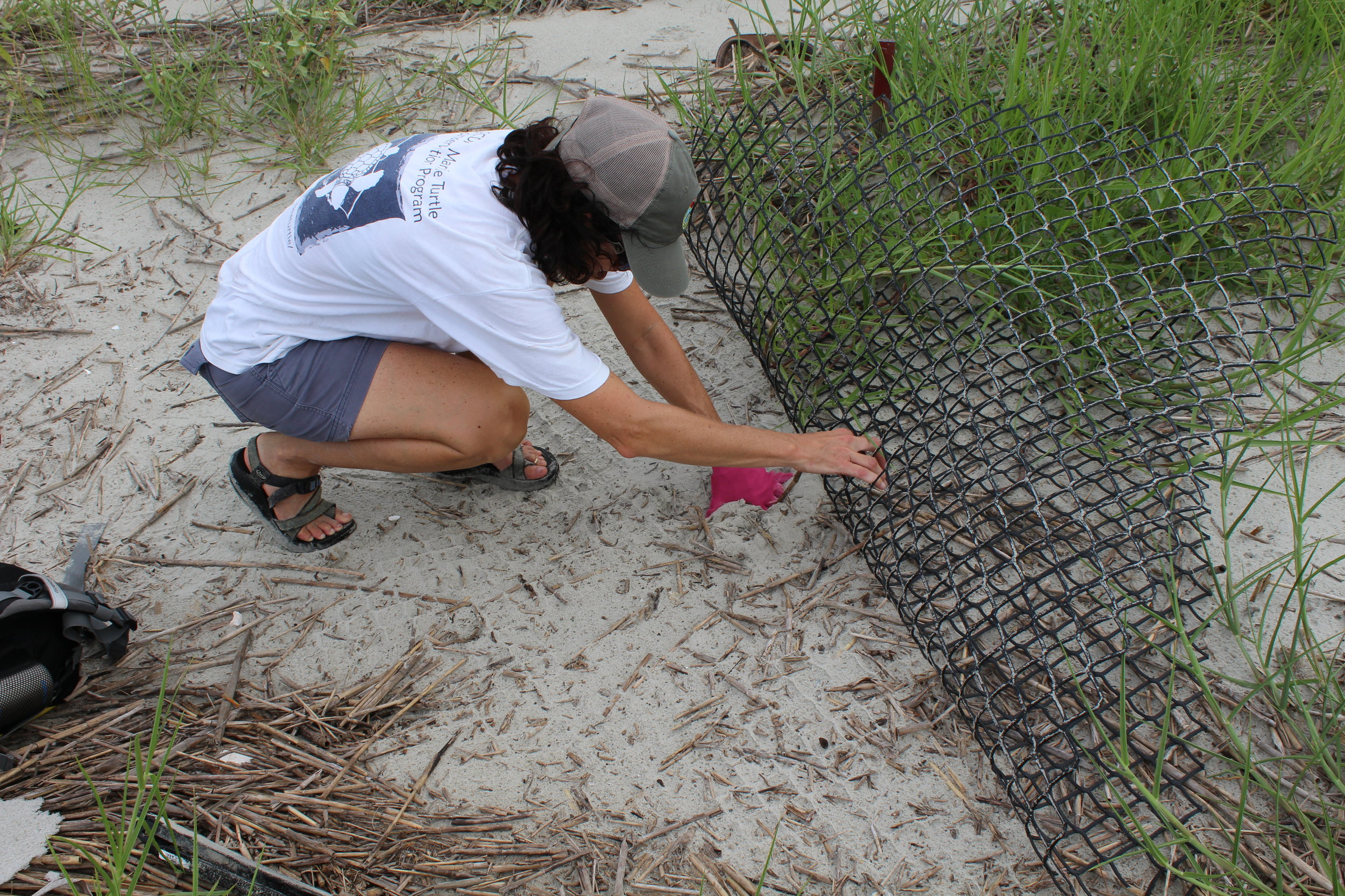 Michelle Pate peels back a predator guard over a hatched sea turtle nest. SCDNR sea turtle biologists work to count, protect, and monitor sea turtle nests on remote islands across the coast. (Photo: E. Weeks/SCDNR)