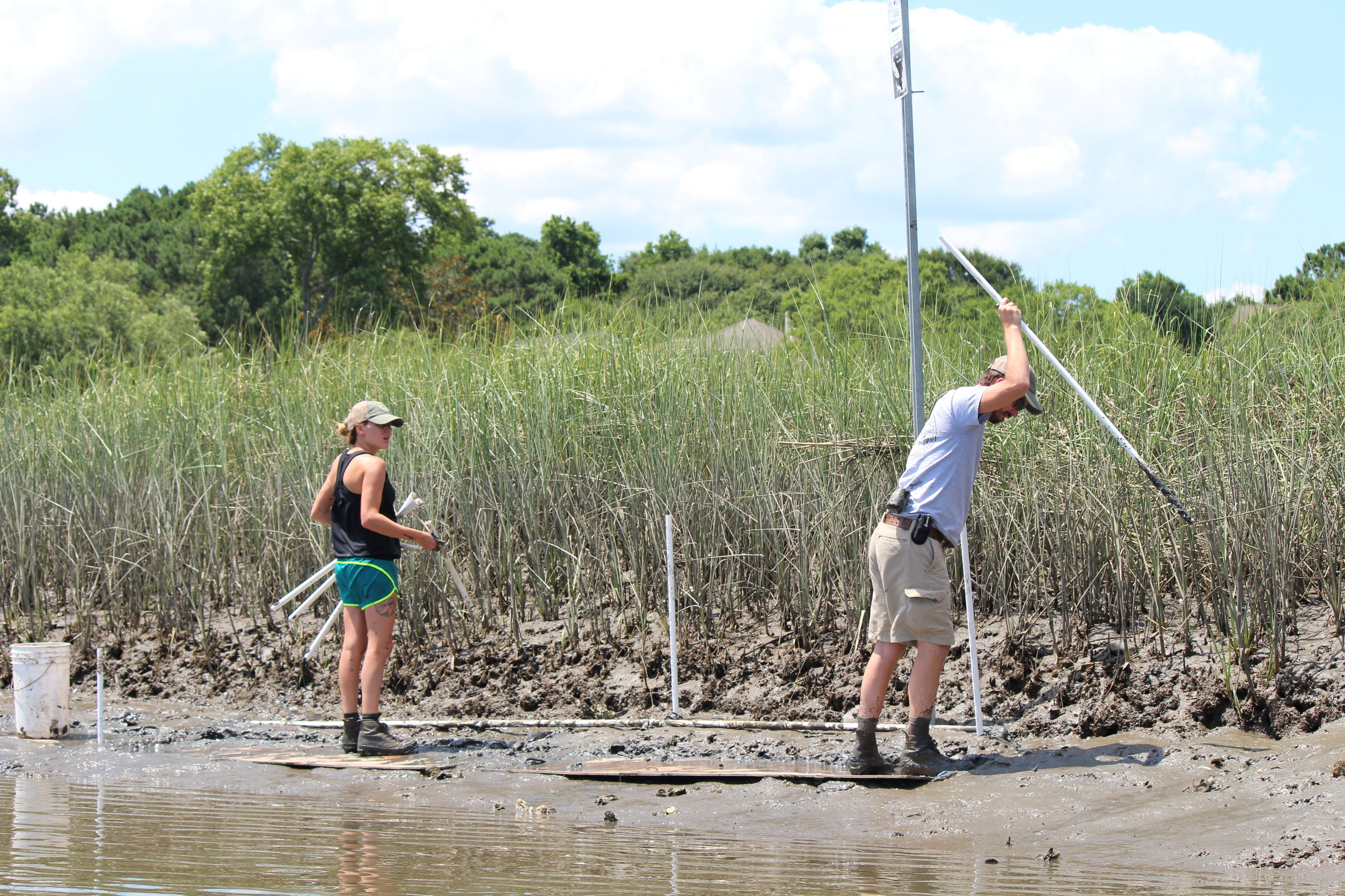 Boards on the pluff mud help Abi DelGiorno and Austin Sturkie move around more freely as they lay out the parameters for an experimental living shoreline installation. (Photo: E. Weeks/SCDNR)