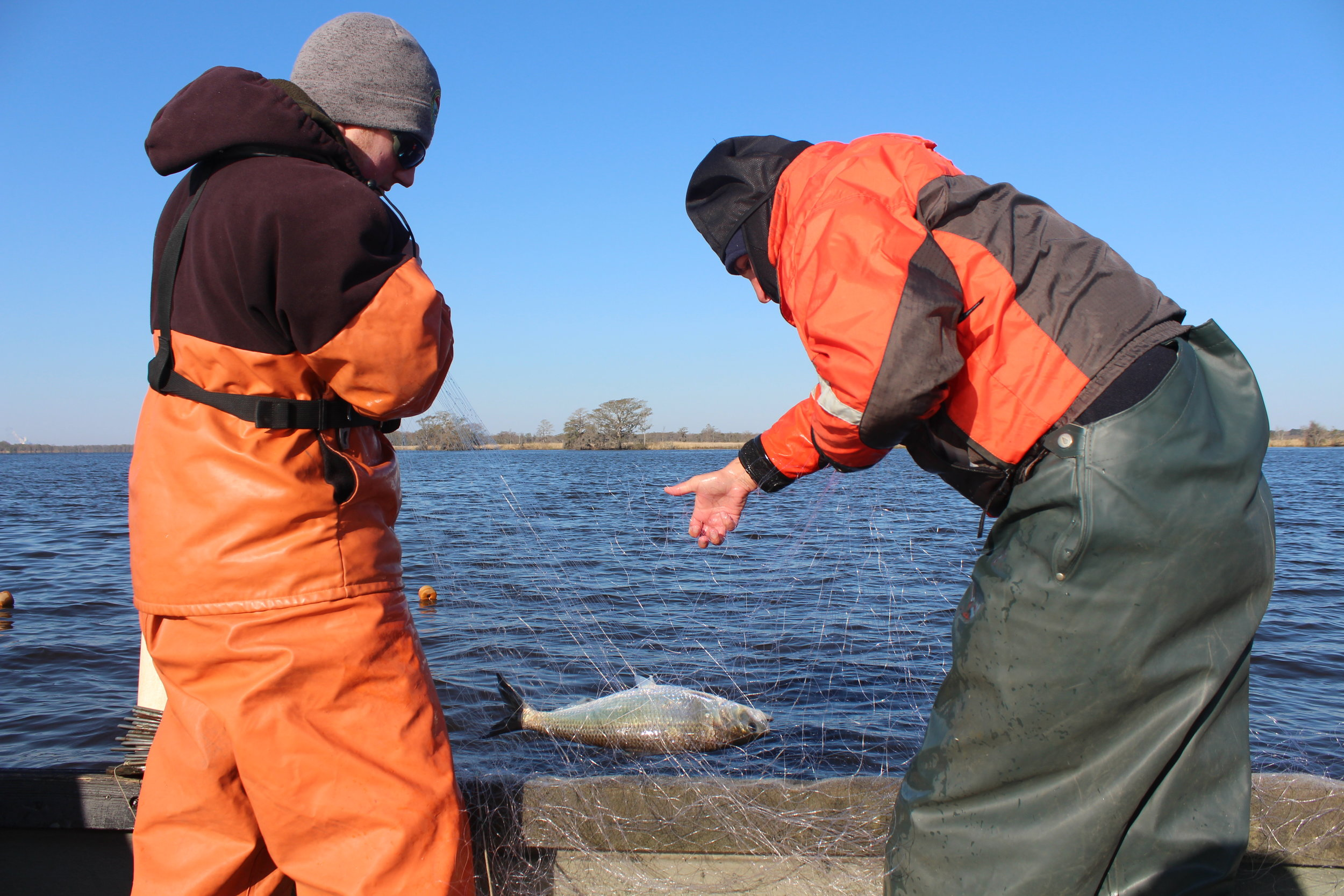Andrew Watson and Kayla Rudnay pull in one of the first American shad of the day.(Photo: E. Weeks/SCDNR)