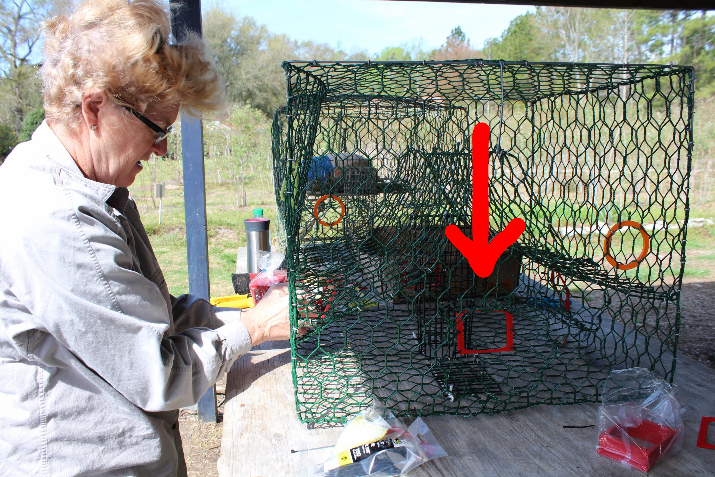 Volunteer Dale Aren installs a red BRD in each of the four funnel openings of this crap trap. (Photo: E. Weeks/SCDNR)