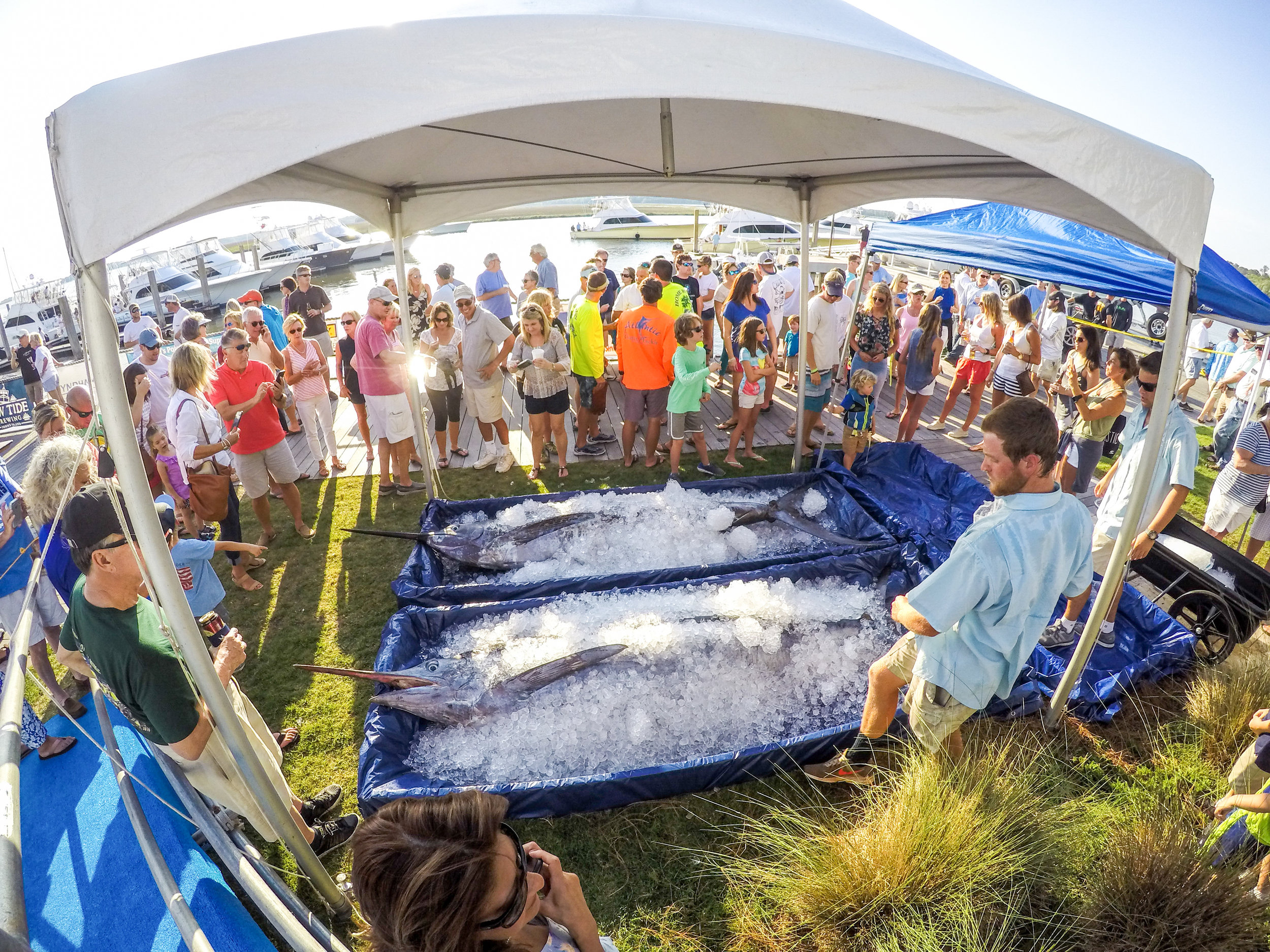 The crowds gathered to see the iced down blue marlin_credit Cameron J. Rhodes-2 (2).jpg