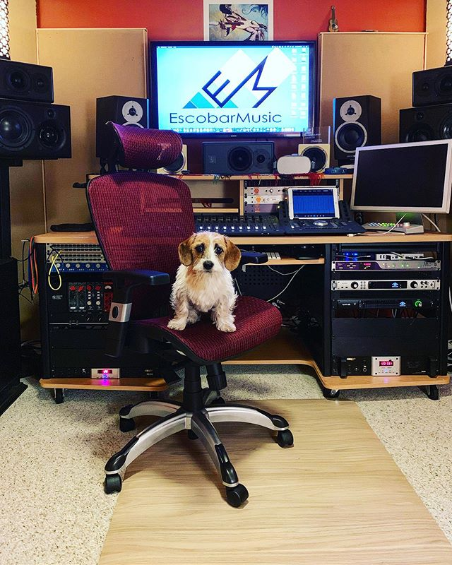 Always open to hearing what you think about the music 🐶🎶👂🔊😜 . . . #musicproducer #musicproduction #studiovibe #studiodogs #studiodog #songwriters💥 #singersongwriter #newmusic #mixingtips #mixtips #mixingengineer