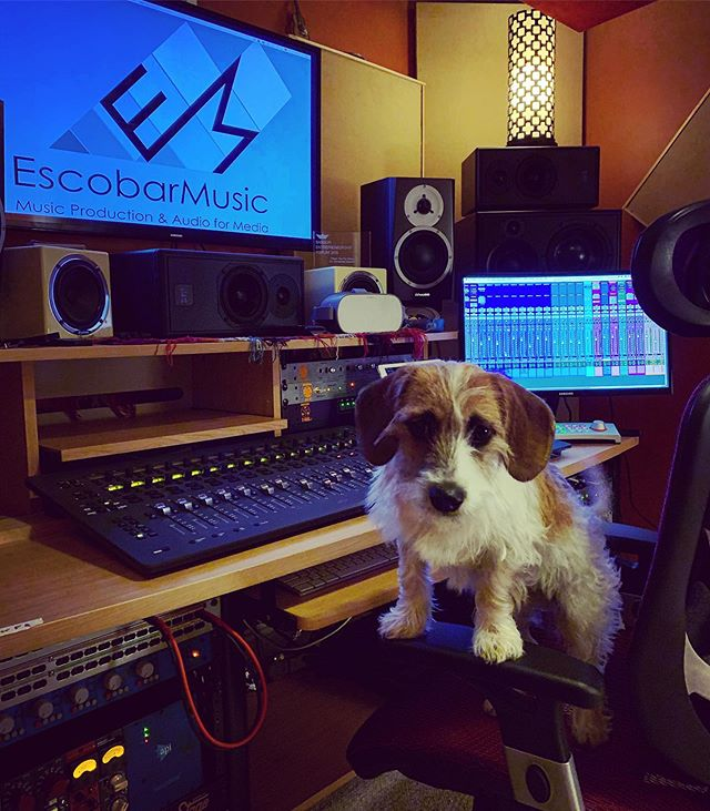 #faderfriday #studiopup 🐕 🐶🎶🔊😎 . . . #studiovibe #fridaysession #musiclife #musicproducer #music #musicproduction #studiodogs #studiopuppy #studiopup #mix #mixengineer