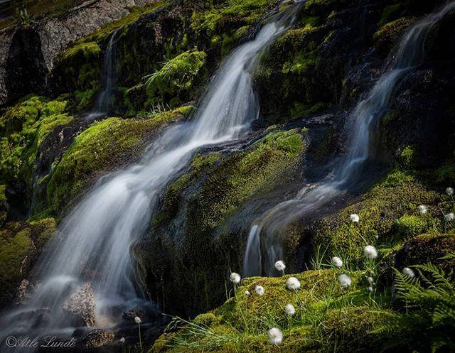 Fjellbekk og myrull #glacierwater #mountains #nature #landscapephotography #fotocatchers #travel #kjøsnesfjorden #jølster #lundeskaret #fjordogfjell #sognogfjordane #refleksjon #landscape #visitnorway #tur #utpåtur #norsknatur #mittnorge #turistforeningen #fjell #vatn #norgefoto #topptur #raw_norway #mittvestland #sognogfjordane #utno