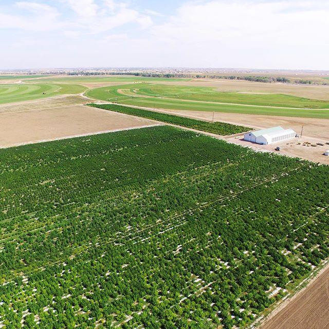 Thank you to Heath Thomson, our Director of Business Development for getting these amazing aerial shots of our CFH Colorado Farm. #cbdoil #industrialhemp #industrialhempcbd  #cbd #knowyourcbdsource