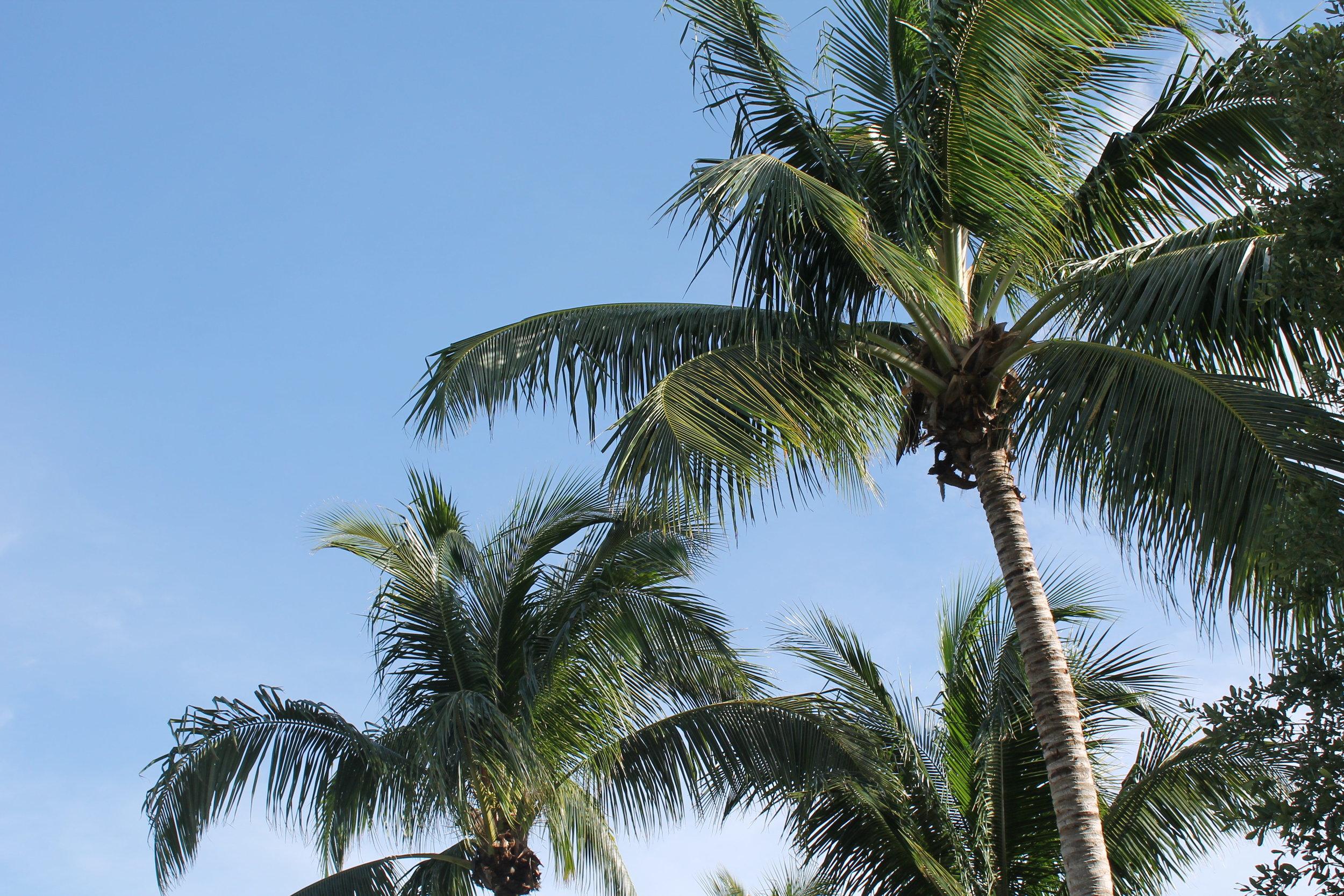 ¿Estás listo para tropicalizar tu idea de negocios?