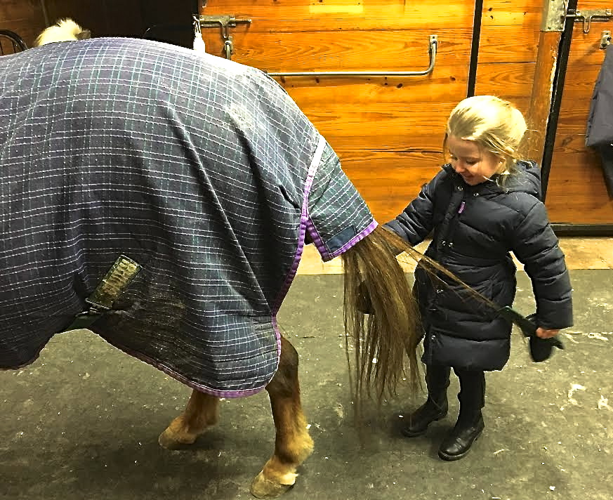 combing horse tail.jpg