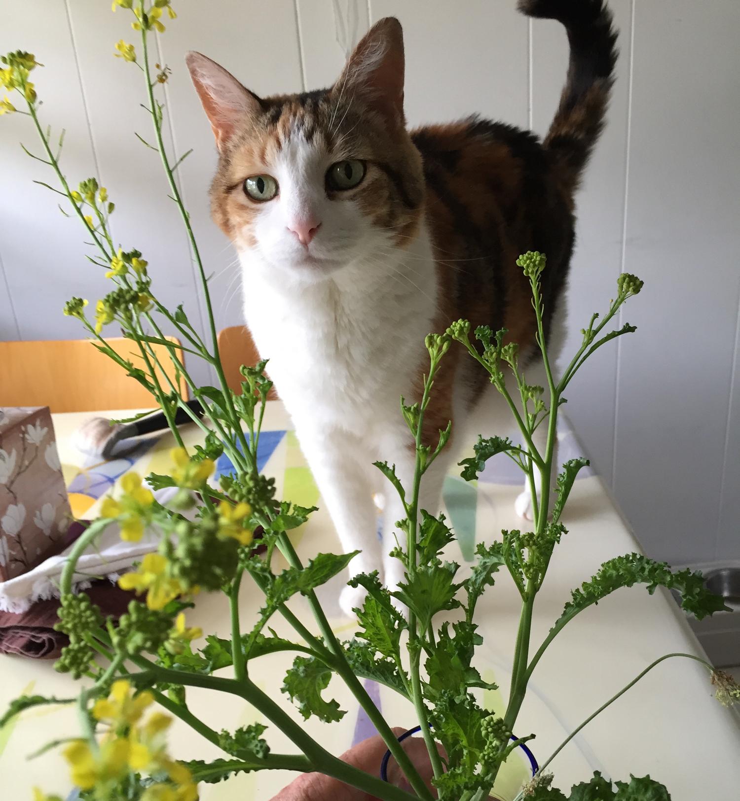 Mustard Greens Blossoms