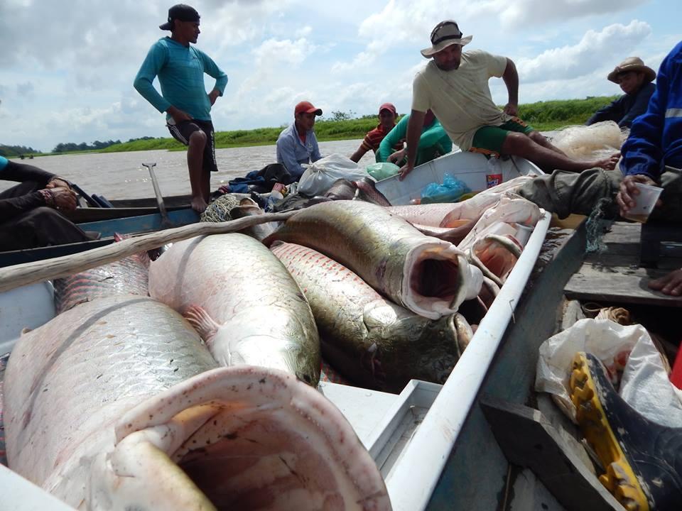 [Capa1] Pesca Pixuna do Tapará Arquivo SAPOPEMA.jpg
